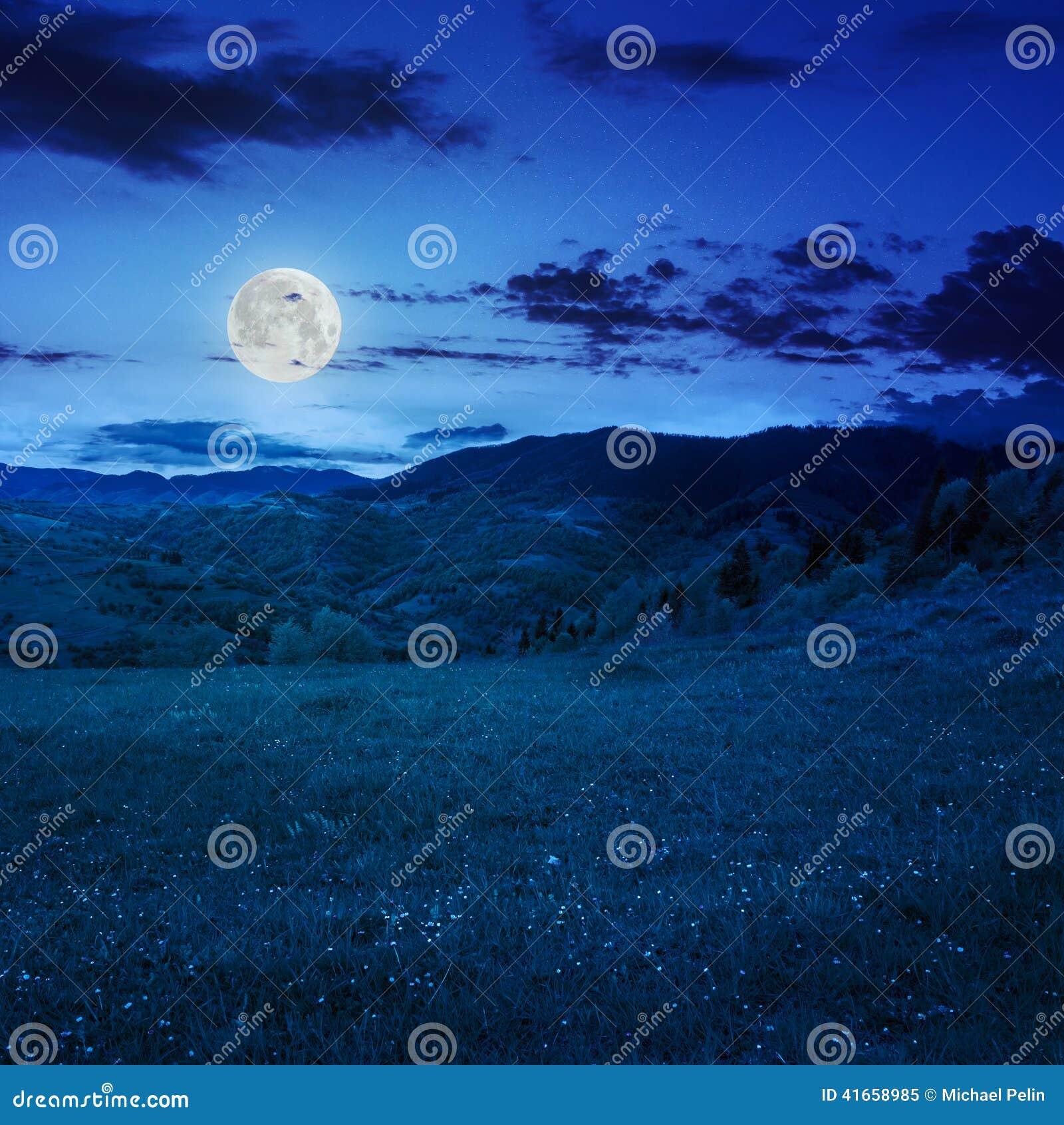 Деревья приближают к лугу в горах на ноче