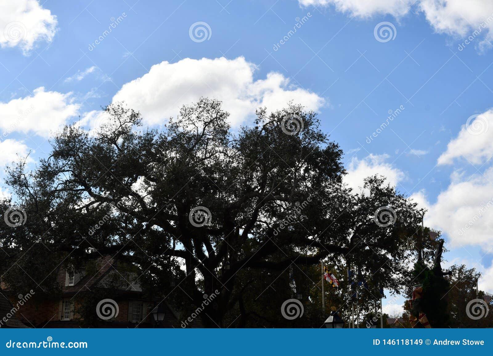 Деревья с взглядом облаков