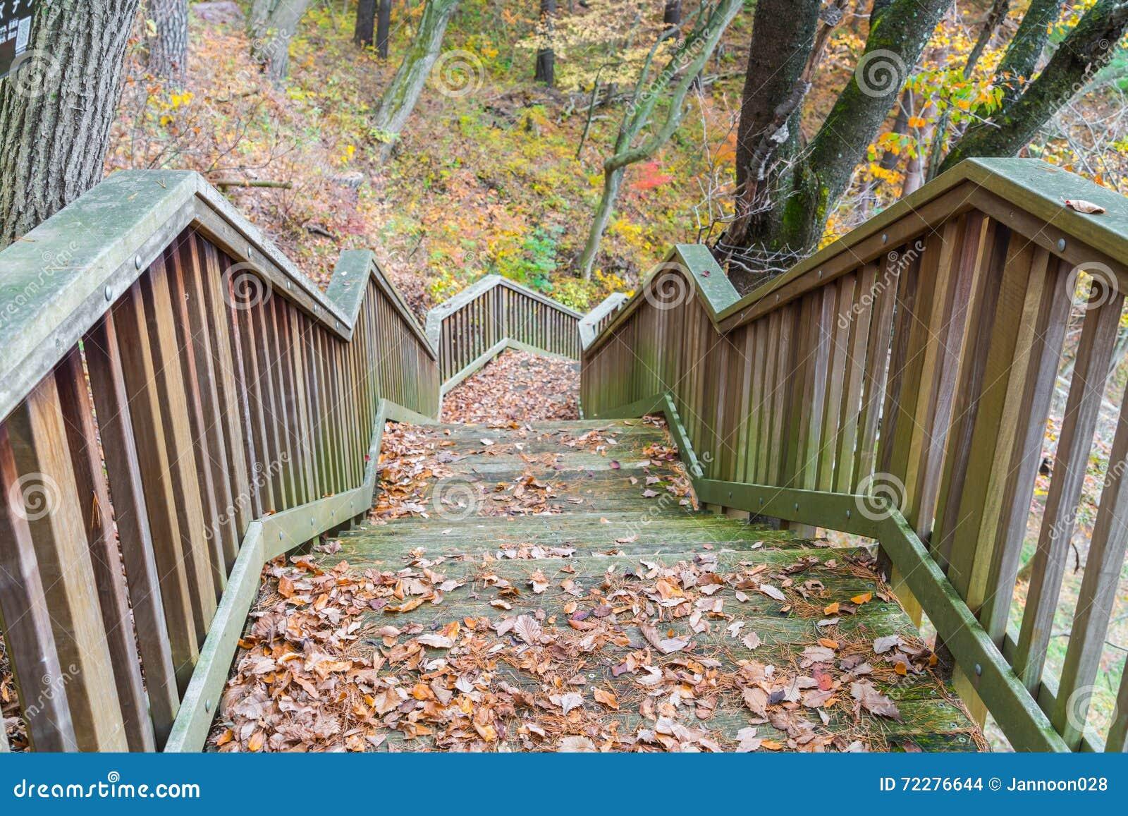 Download Деревянная лестница в парке Стоковое Фото - изображение насчитывающей шаг, парк: 72276644