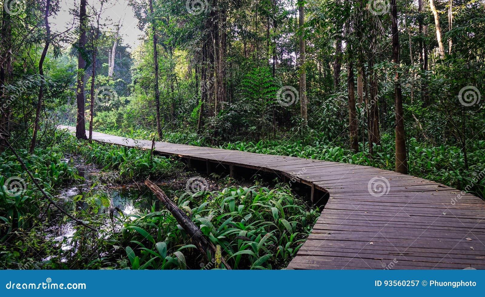 Деревянный мост на парке города