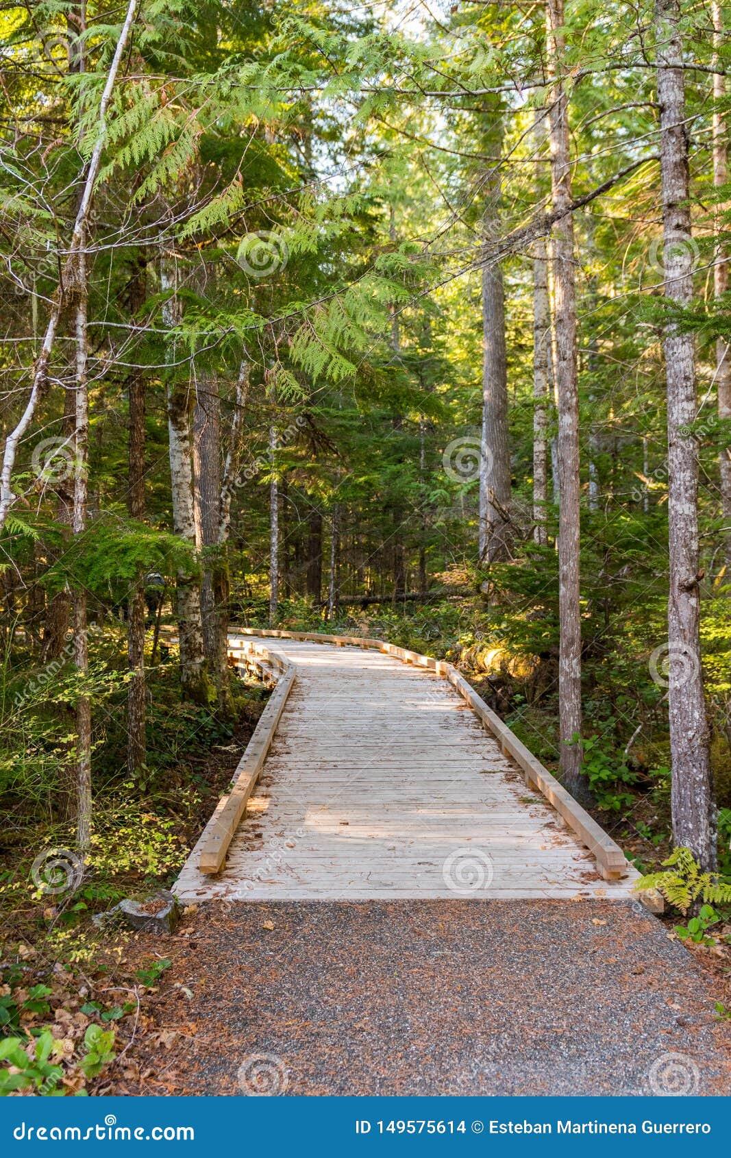 Деревянный след рядом с центром для посетителей северных каскадов, окруженным деревьями