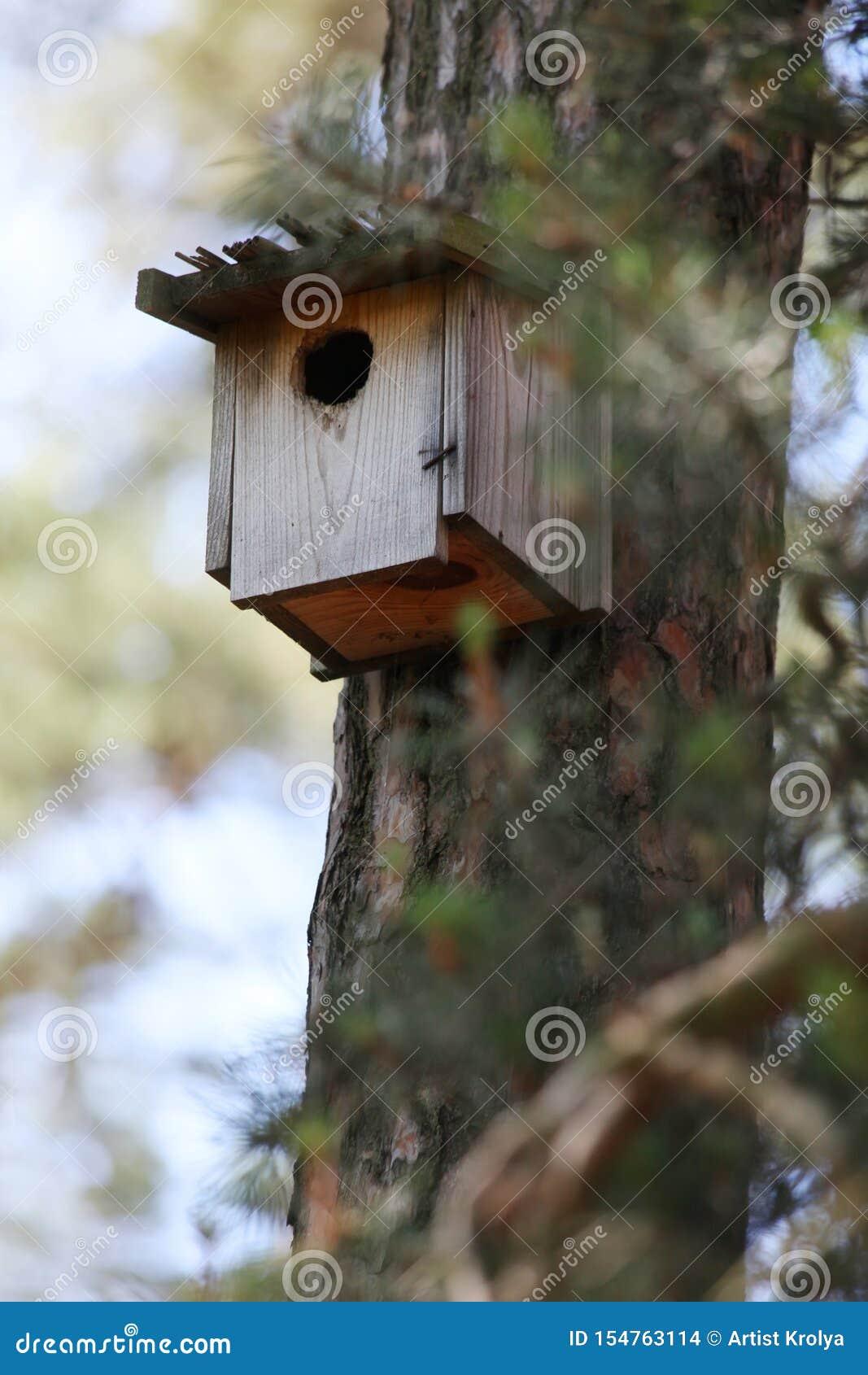 Деревянный birdhouse на сосне в лесе