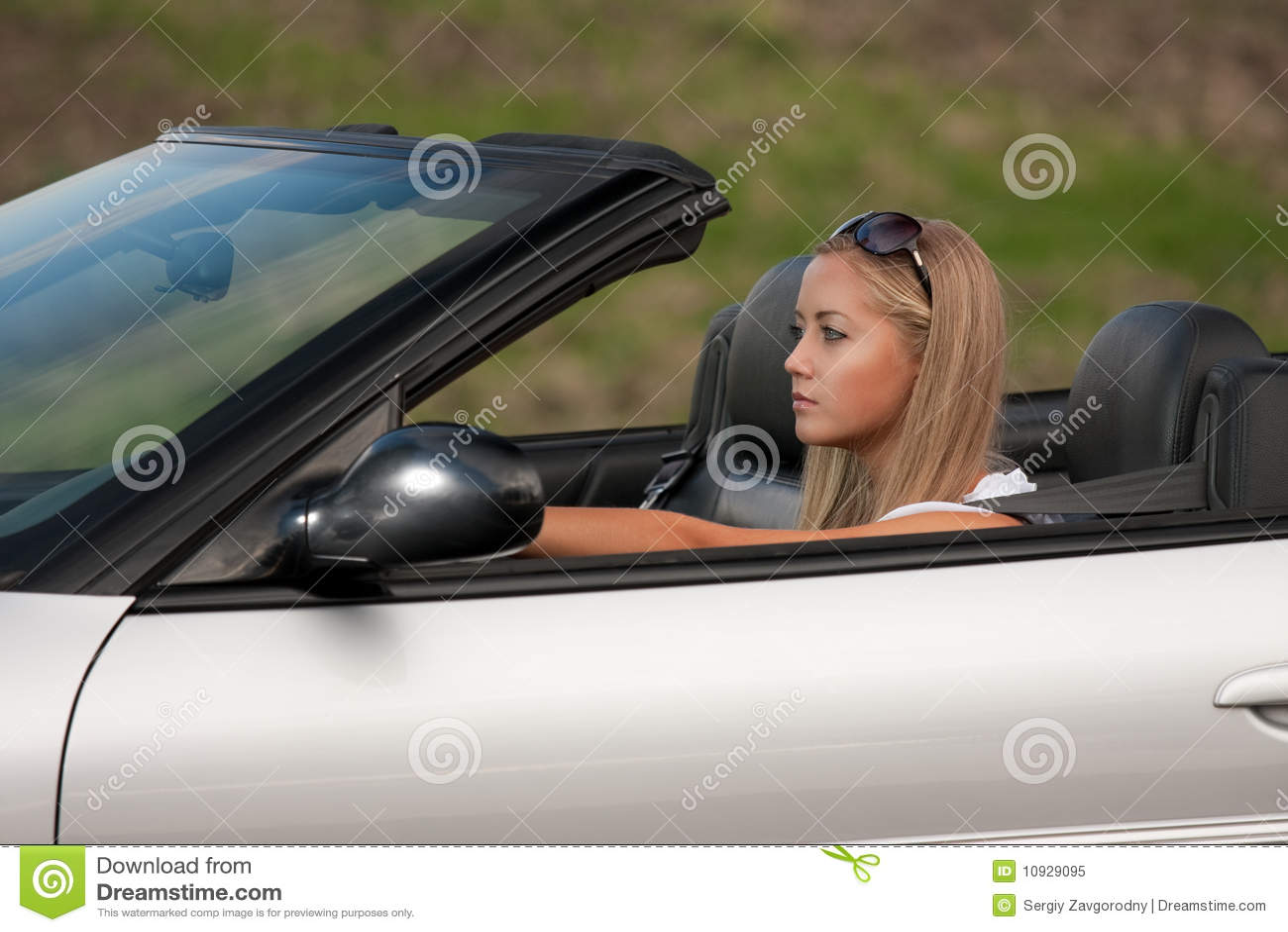 детеныши водителя