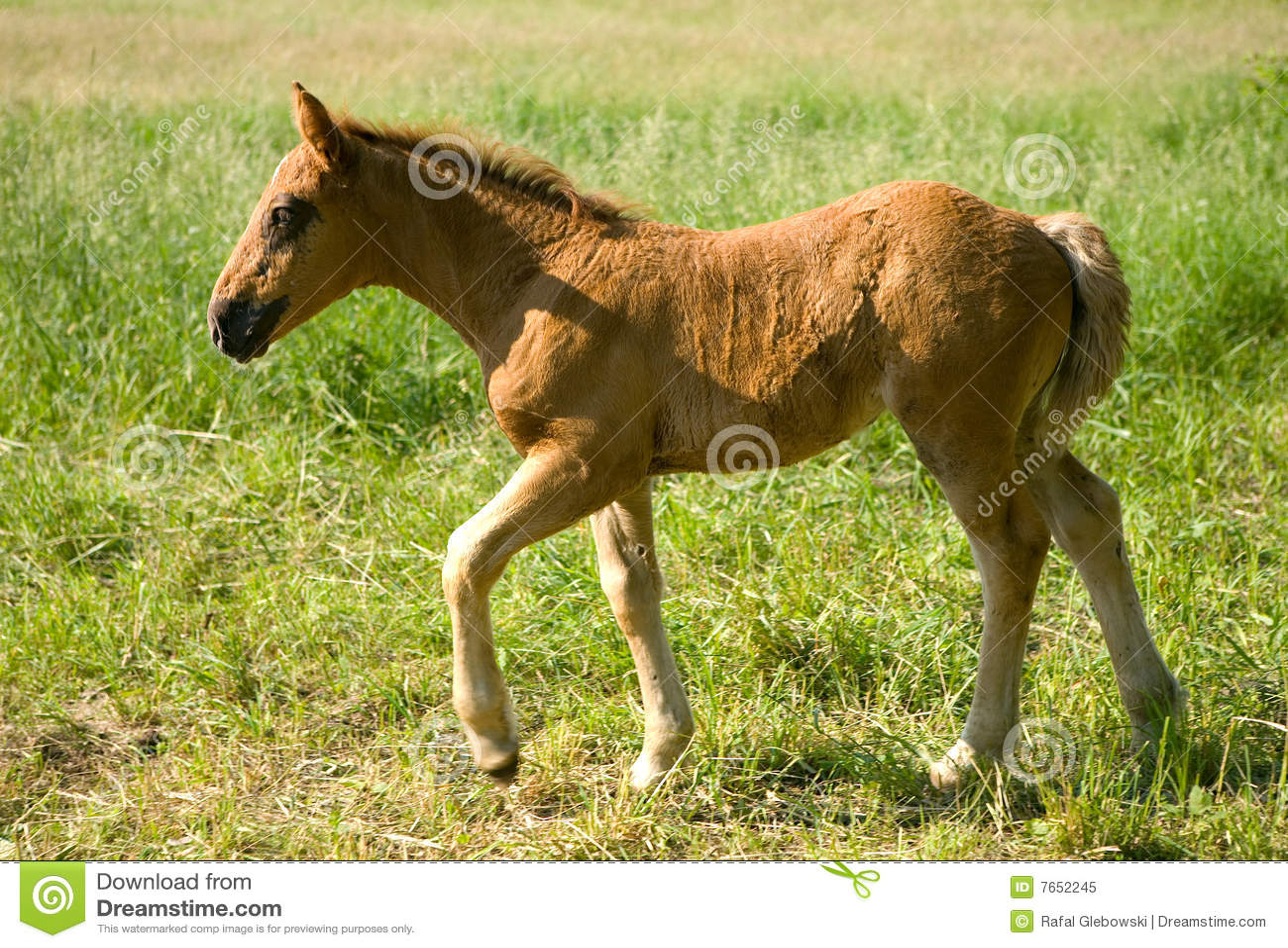 детеныши лошади