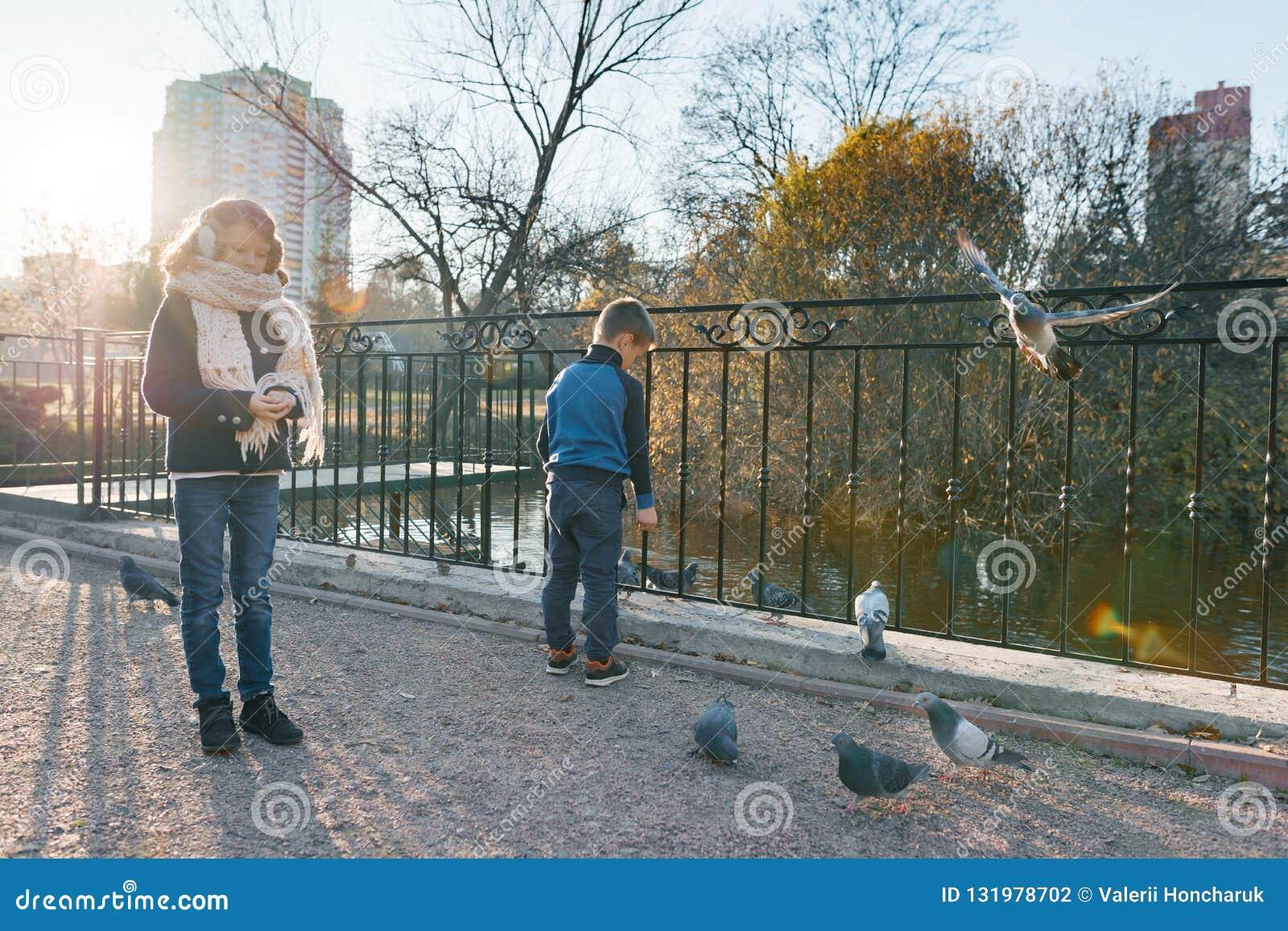 Дети кормят птиц в парке, мальчиков и девушки кормят голубей, воробьев и уток в пруде, солнечном дне в осени
