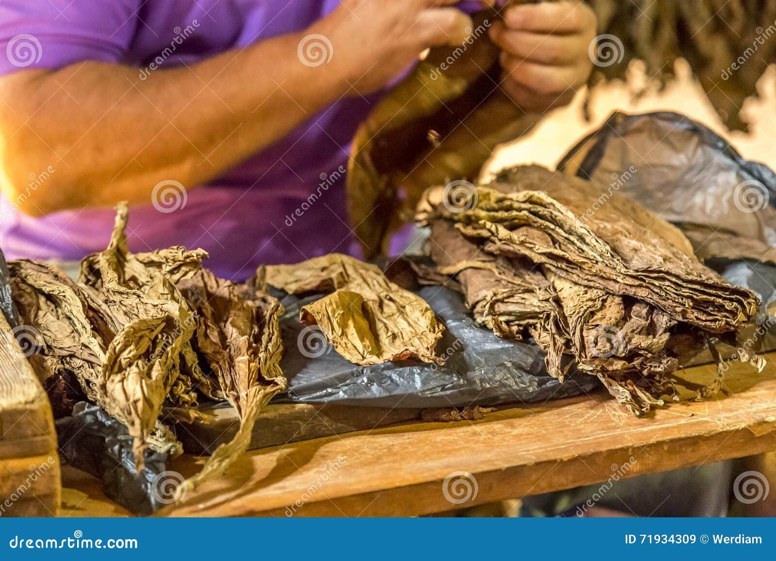 Делать сигары в Vinales, Куба #3/21
