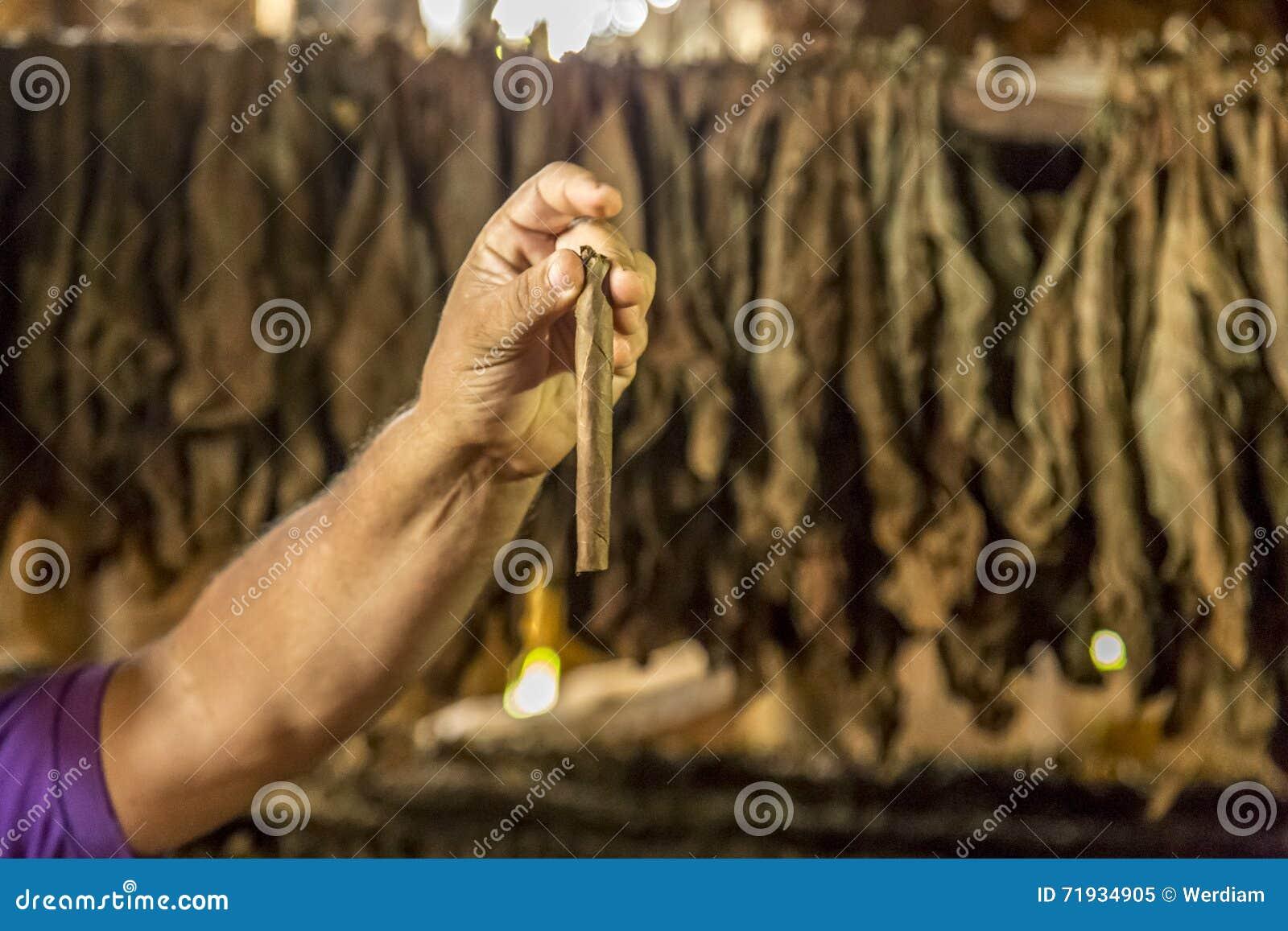 Делать сигары в Vinales, Куба #20/21