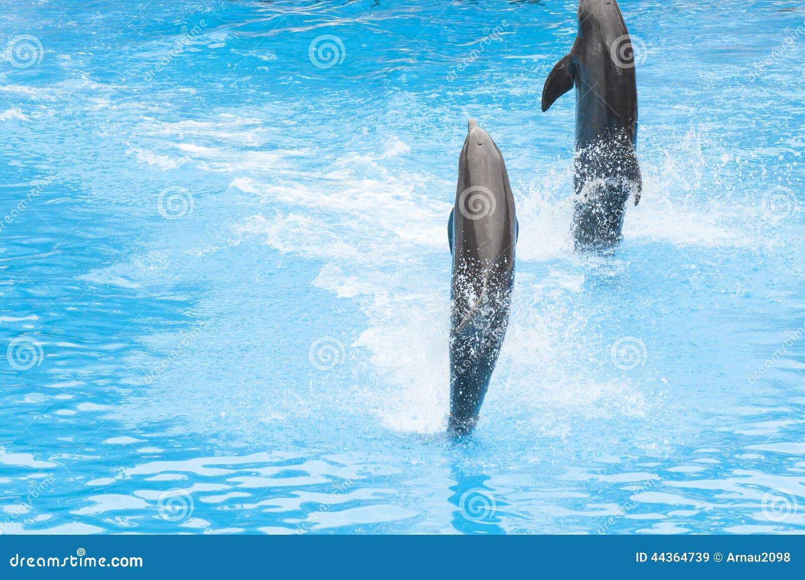 Дельфины плавая