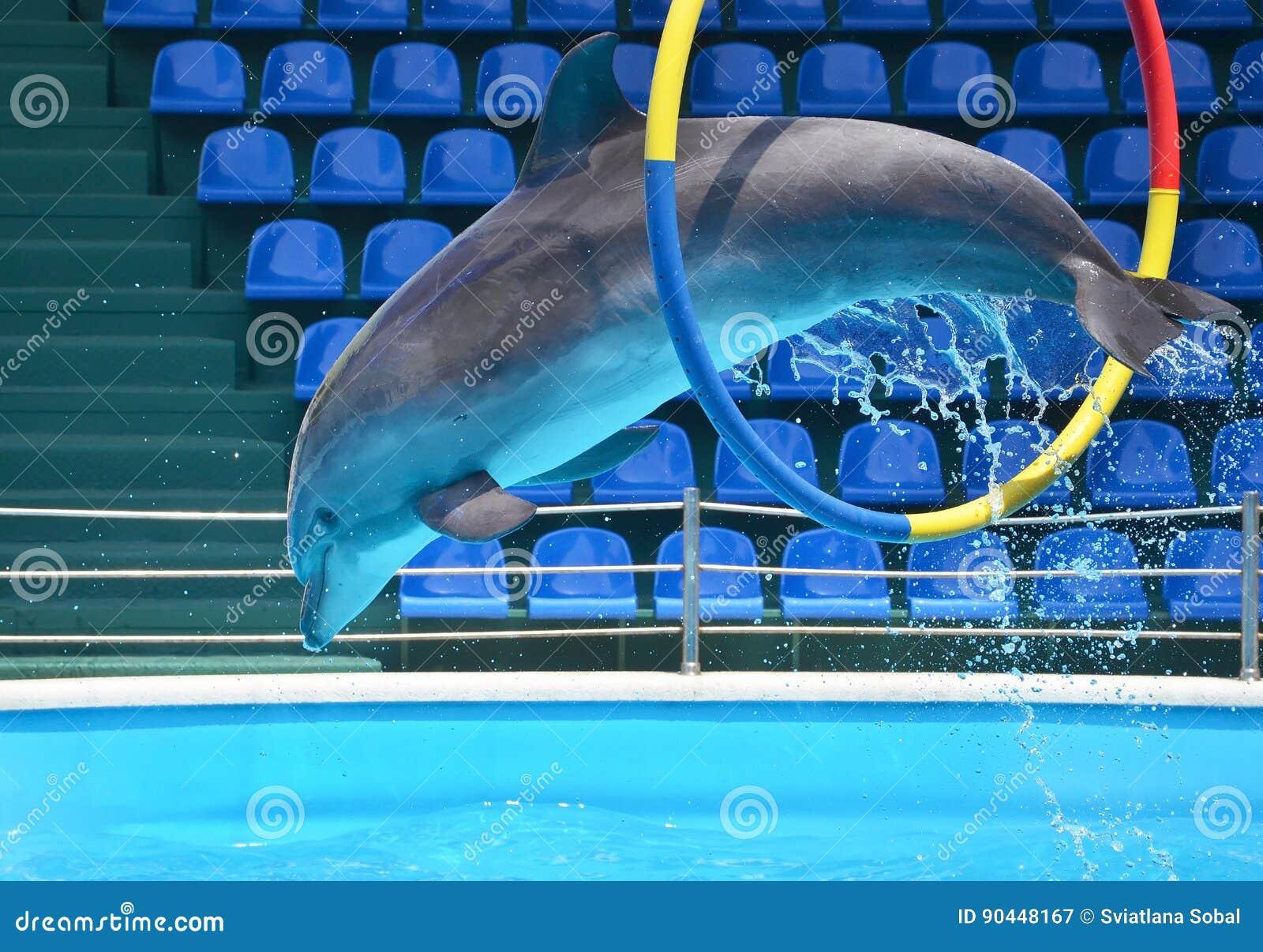 Дельфин скача через обруч