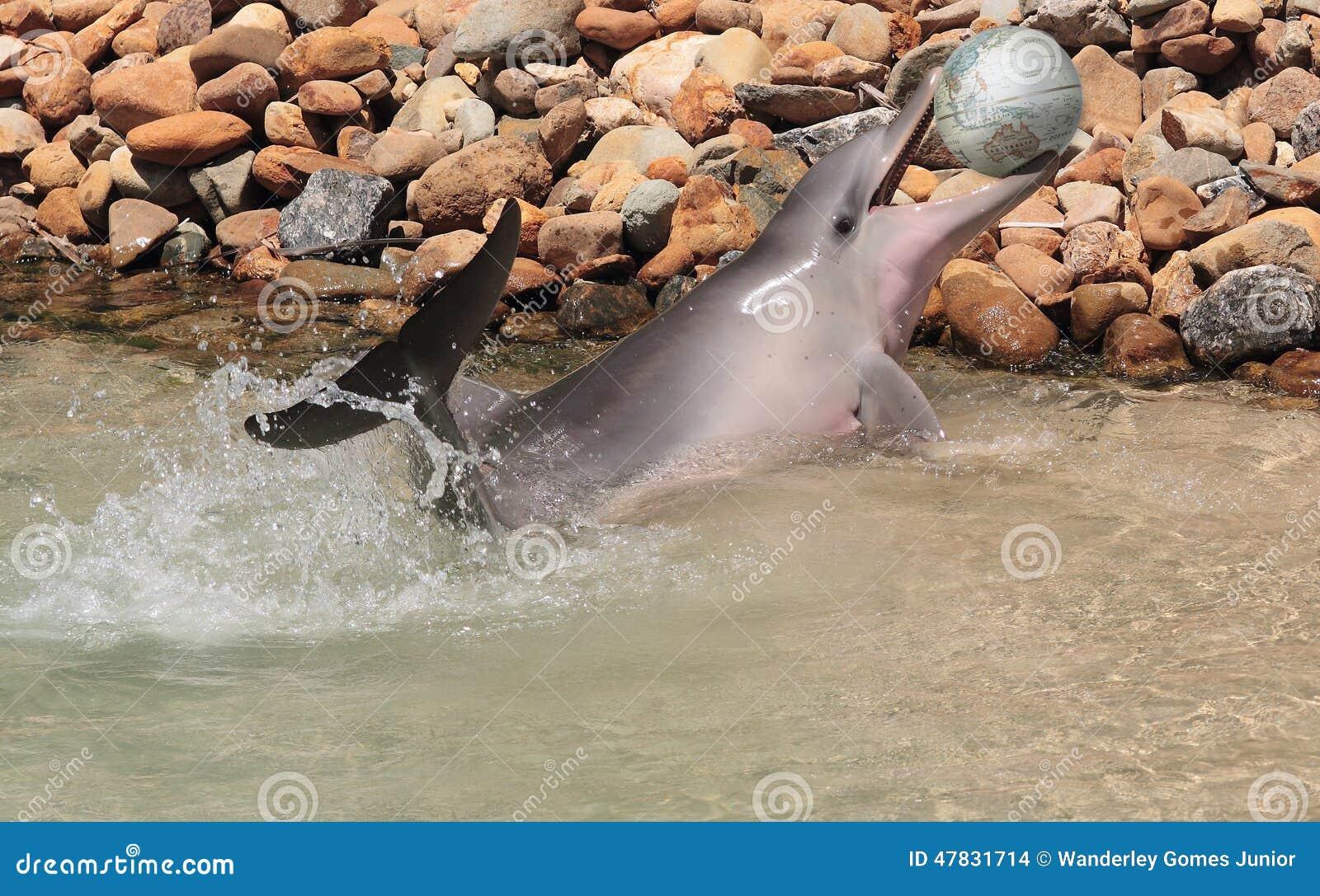Дельфин с глобусом мира