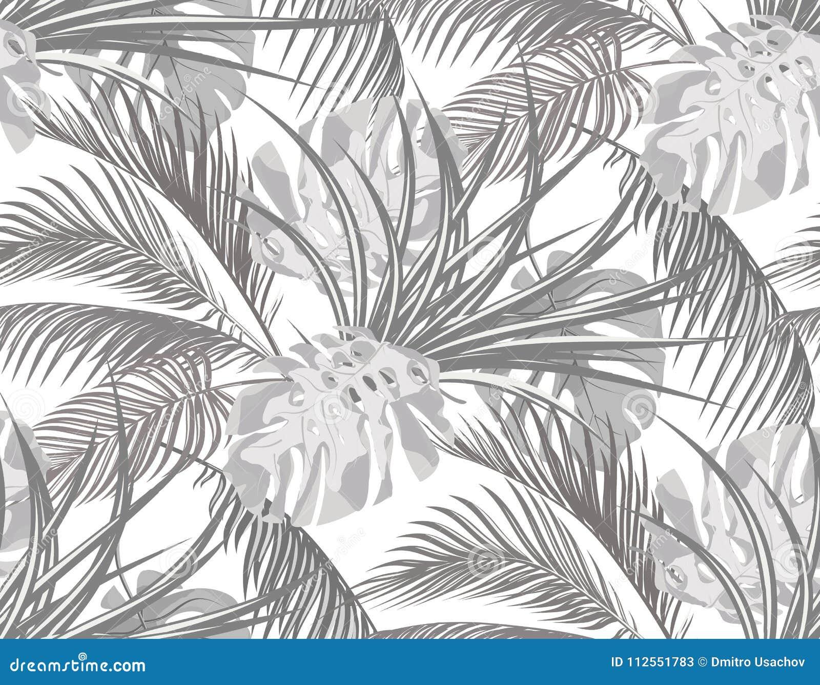 Джунгли Черно-белая предпосылка с листьями тропических пальм, извергов, столетника безшовно Изолировано на белизне