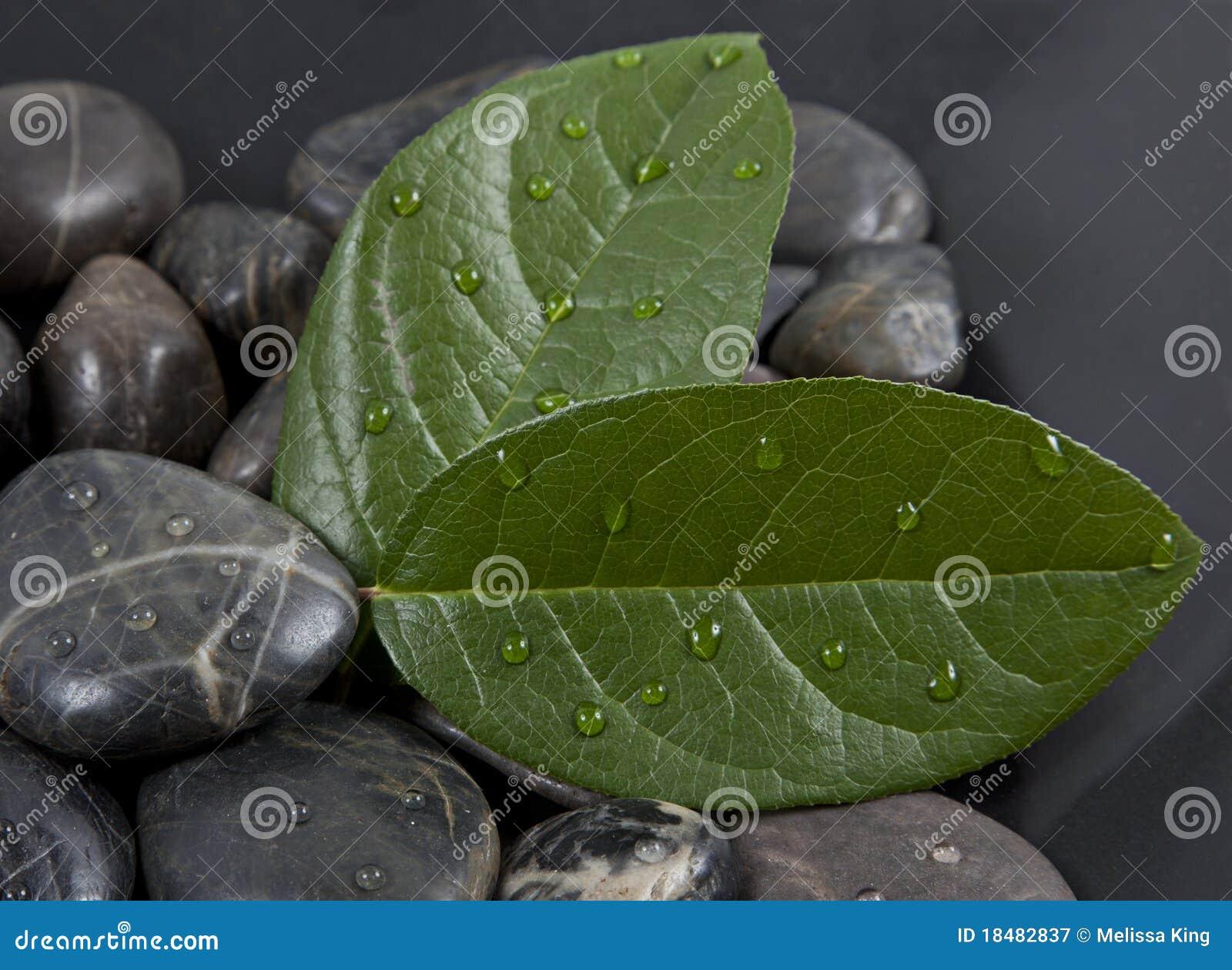 Дзэн воды камней листьев
