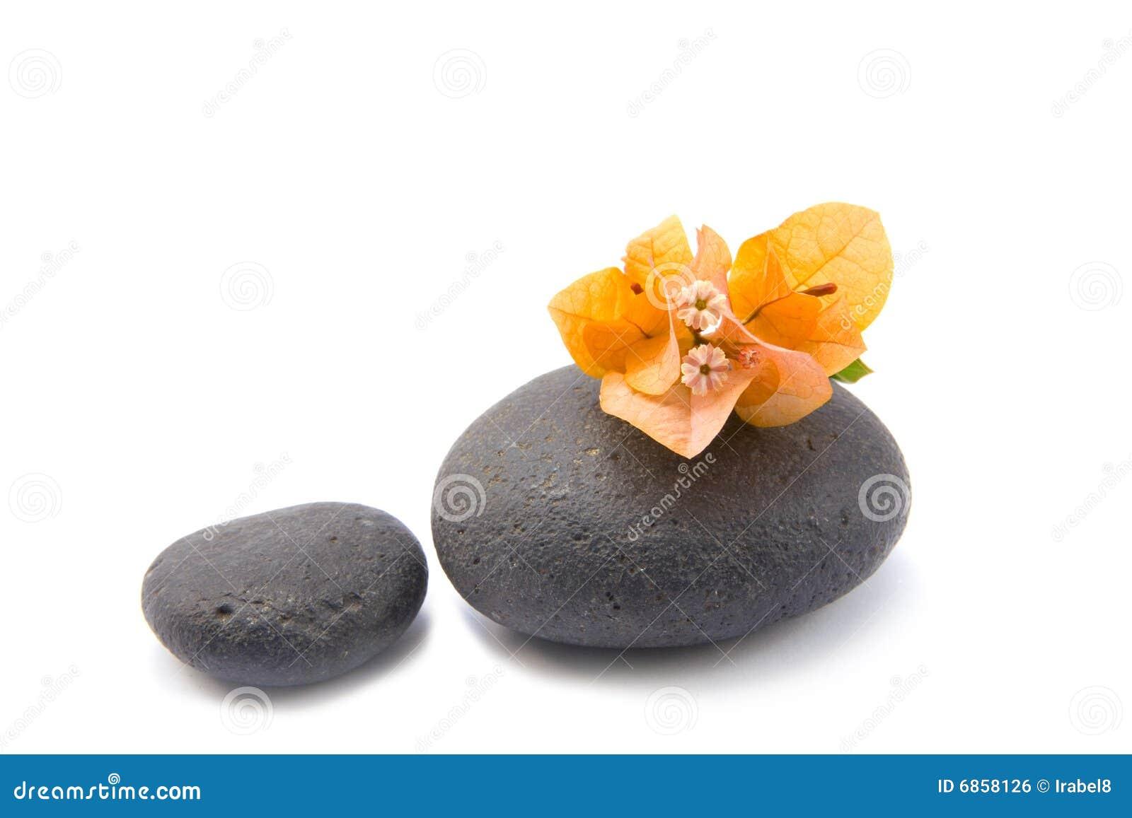 Дзэн камней bouganvilla изолированное цветками