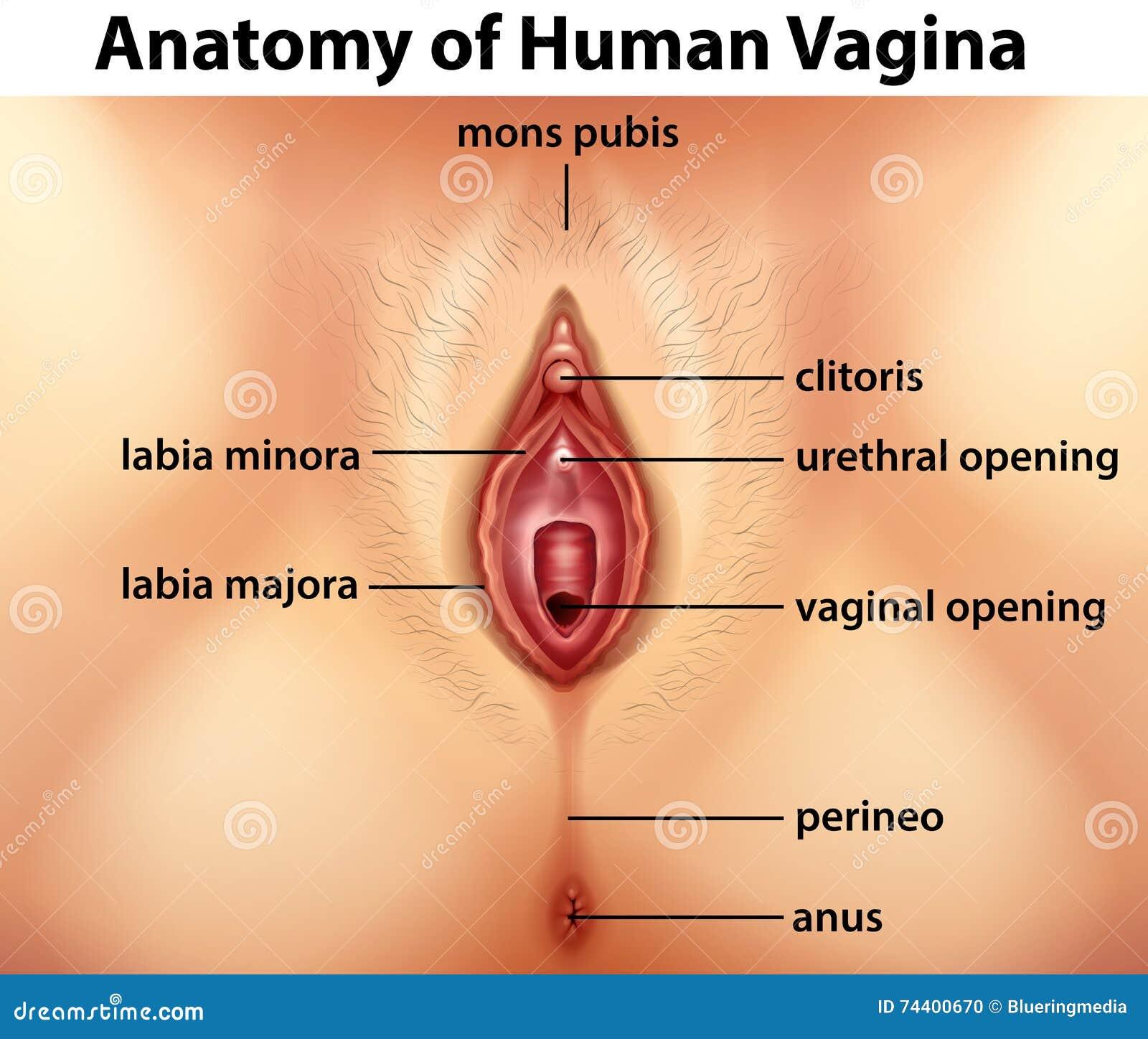 anatomiya-vlagalisha-smotret-seks-porno-pokazat-prosmotr