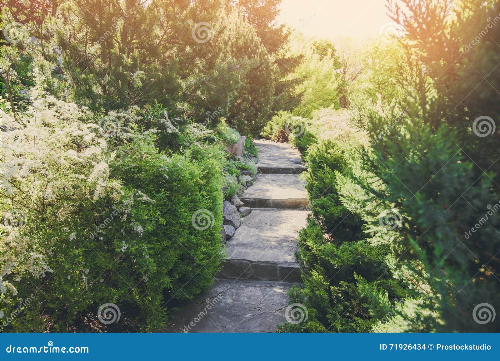Дизайн ландшафта, вечнозеленые кусты и путь