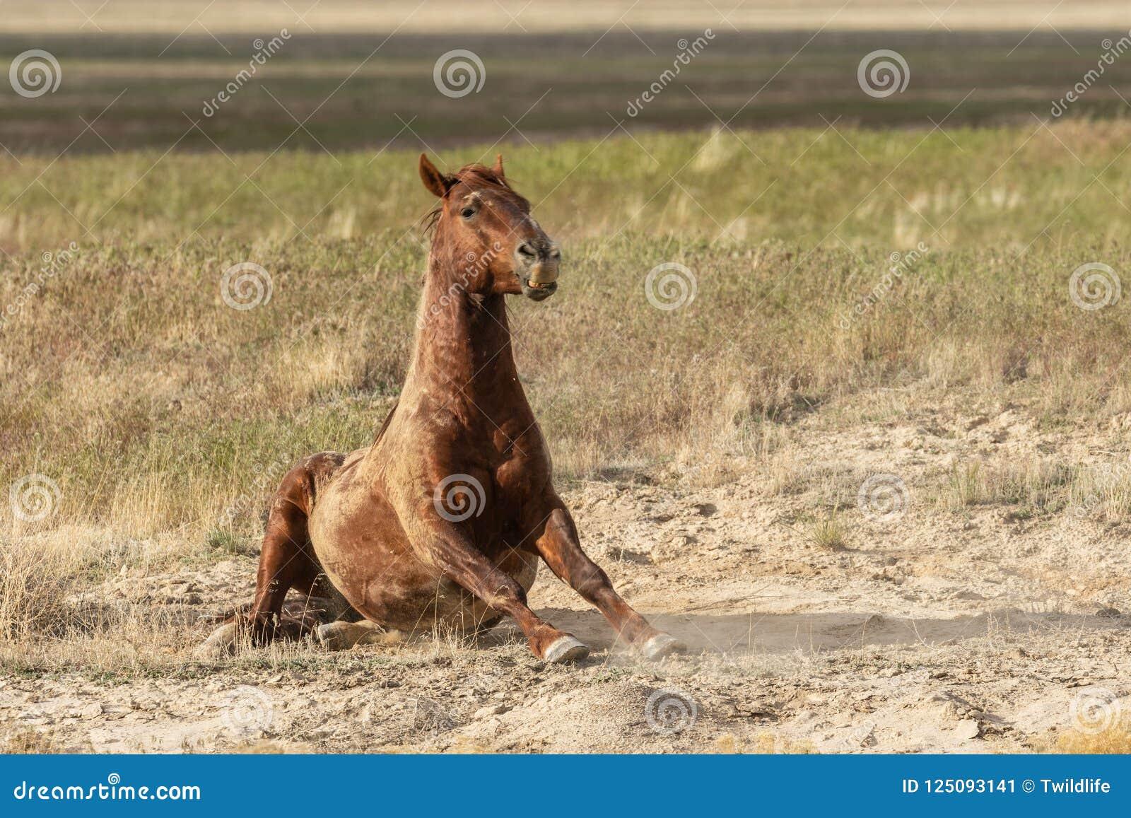 Дикая лошадь в пустыне