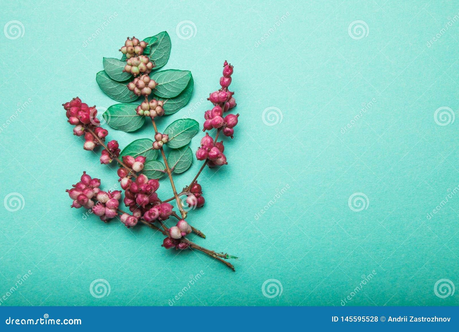 Дикая трава леса, красные ягоды и листья на зеленой предпосылке r