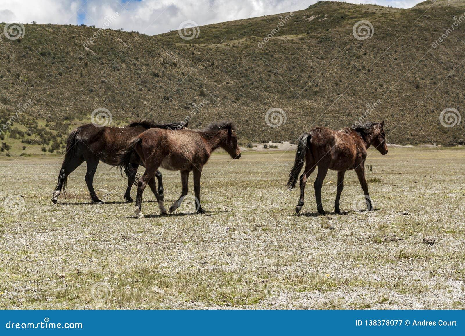 Дикие лошади идя в национальный парк