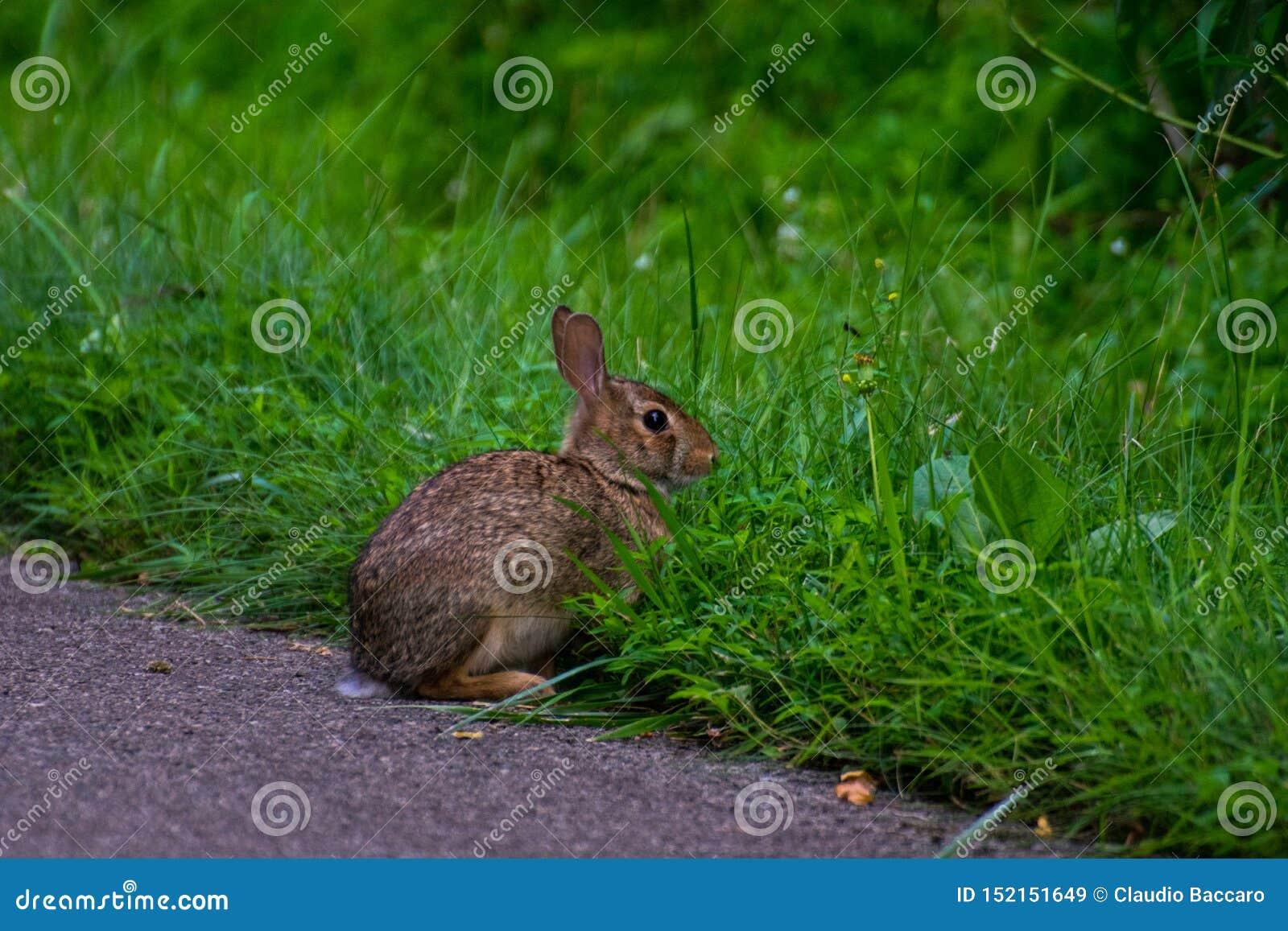 Дикий и очень милый кролик