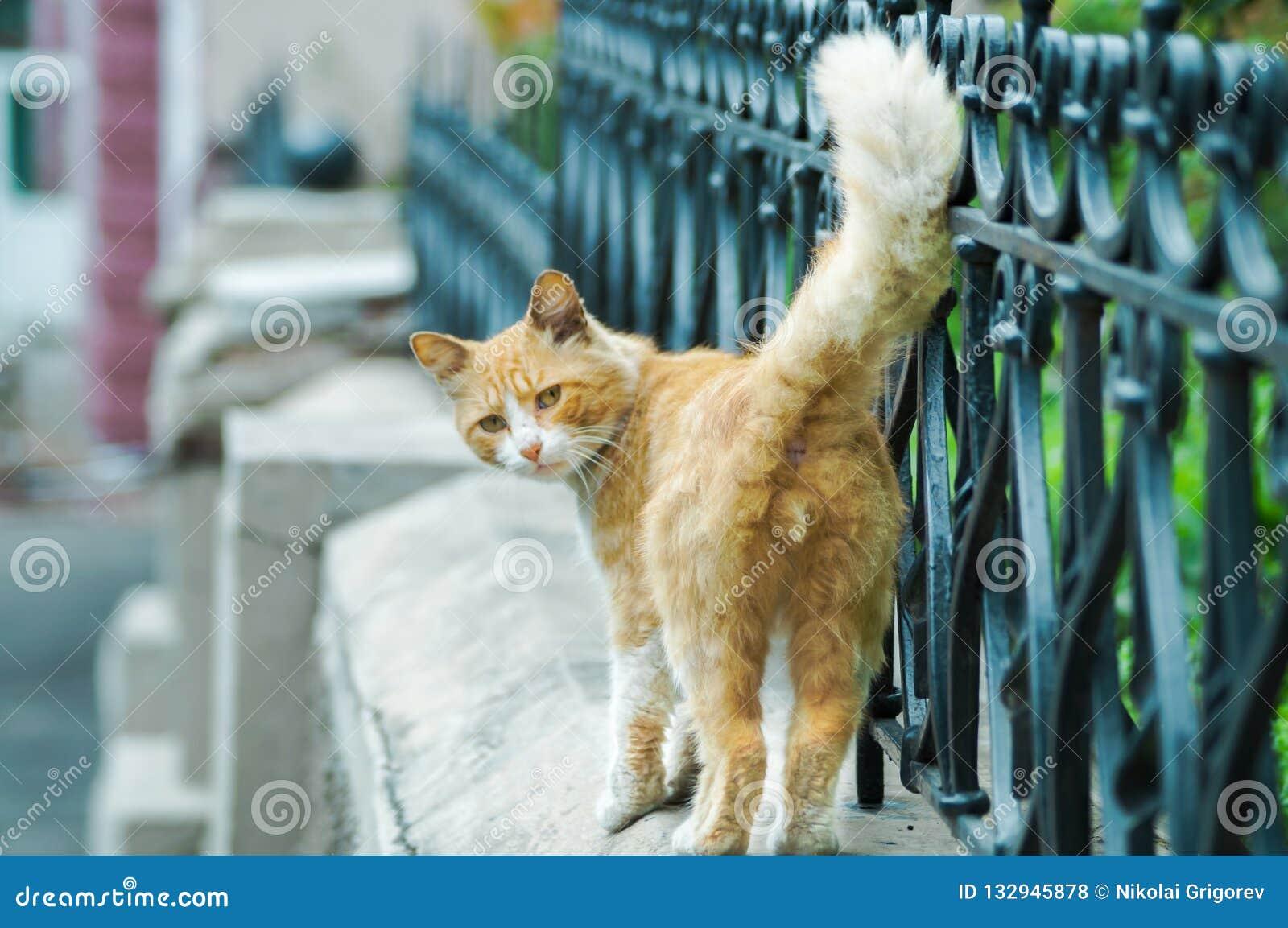 Дикий кот идя вниз по улице смотрит в камере