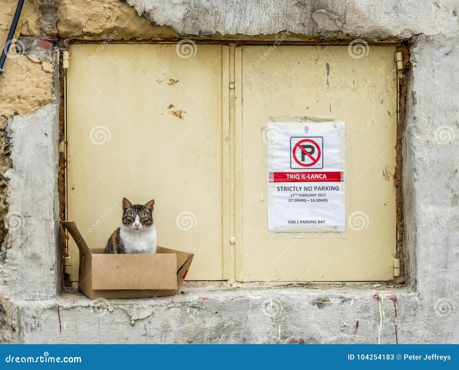Дикий кот Мальта
