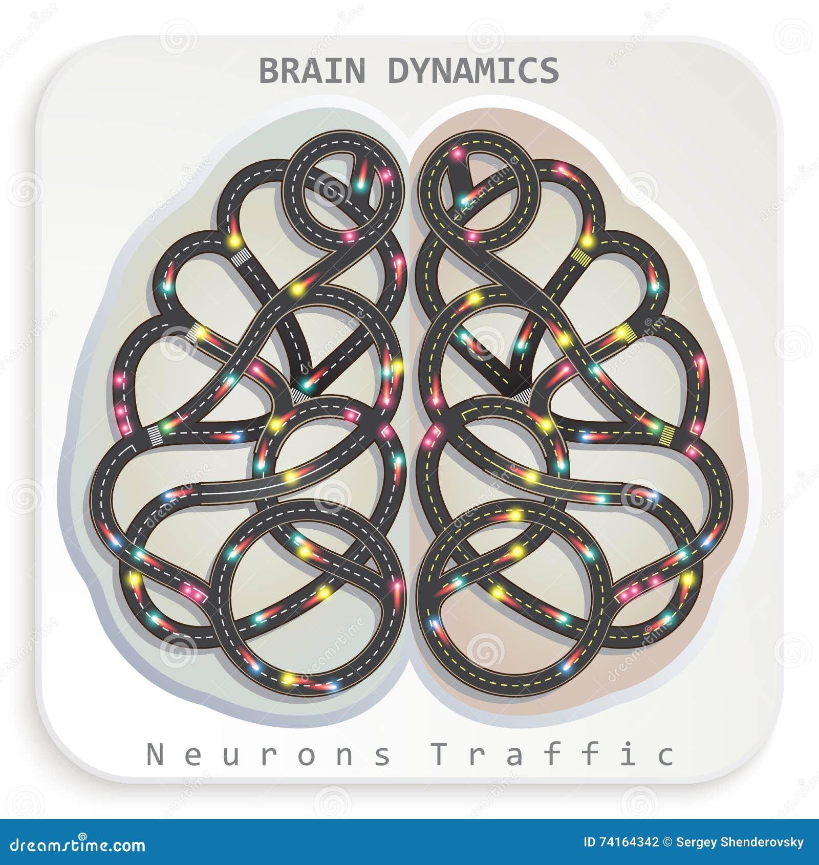 Динамика мозга