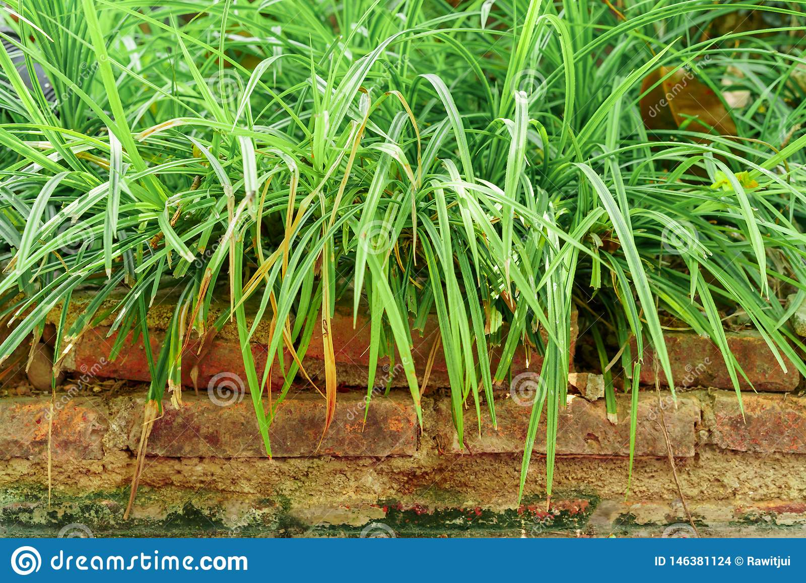 Длинная трава на кирпичах
