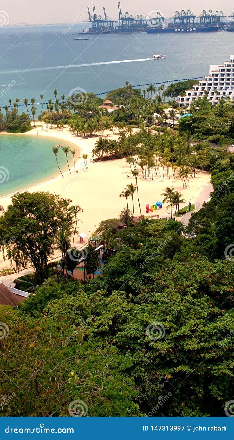 Дневное время и лес пляжа