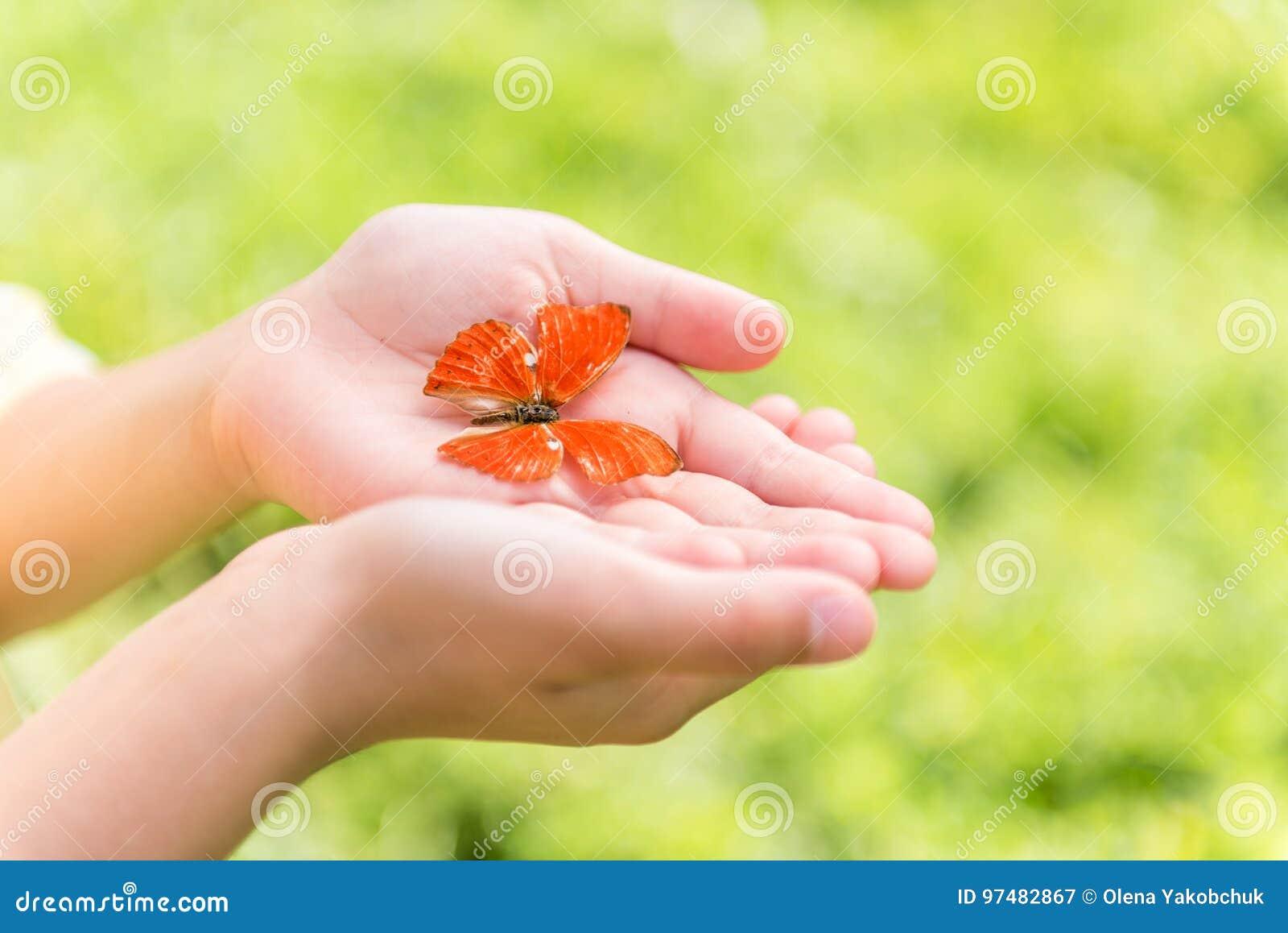 Довольно маленькая бабочка в руках девушки