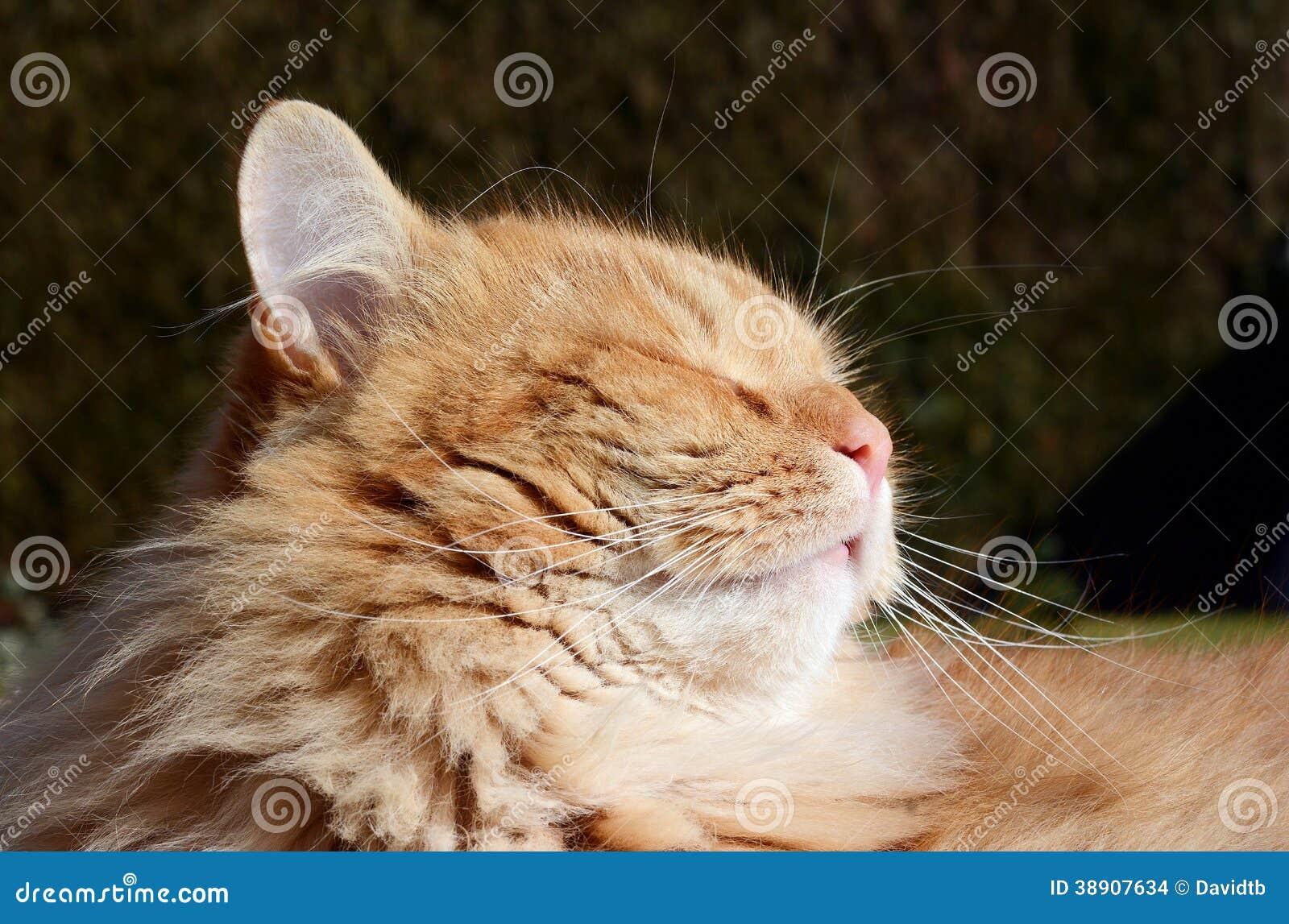 Гордый кот