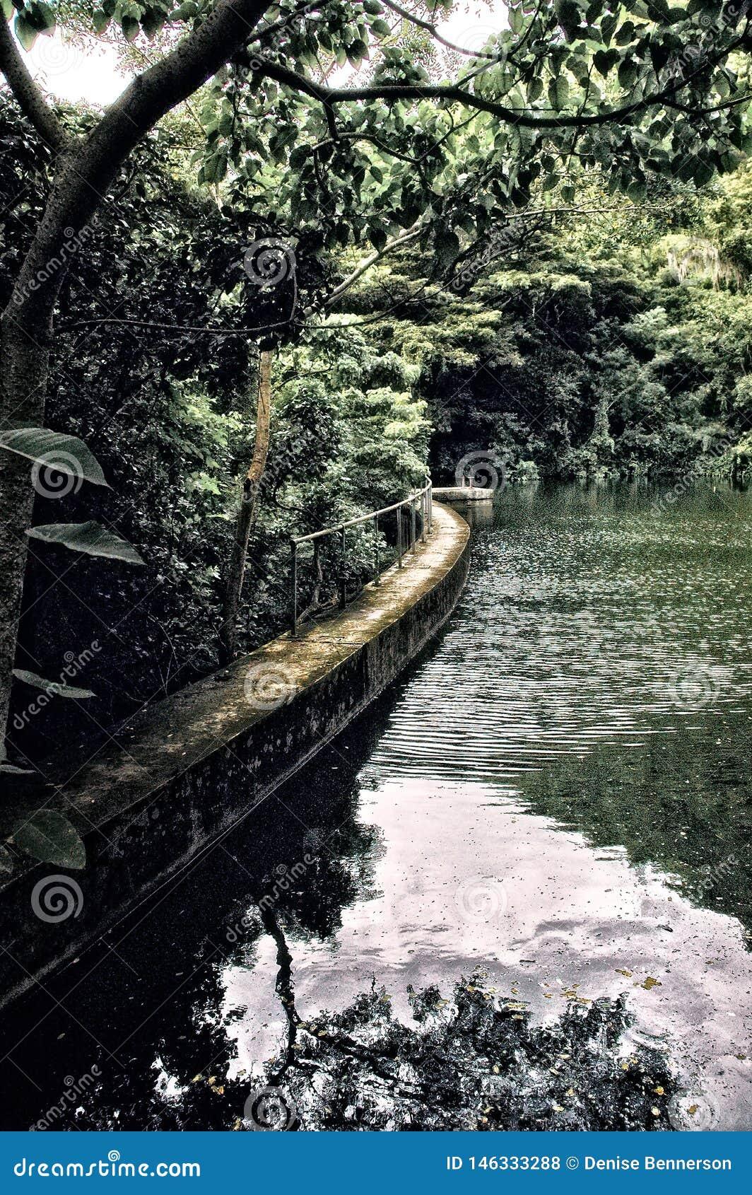 Дождевой лес с запрудой Creque озера в St Croix США Виргинских островах