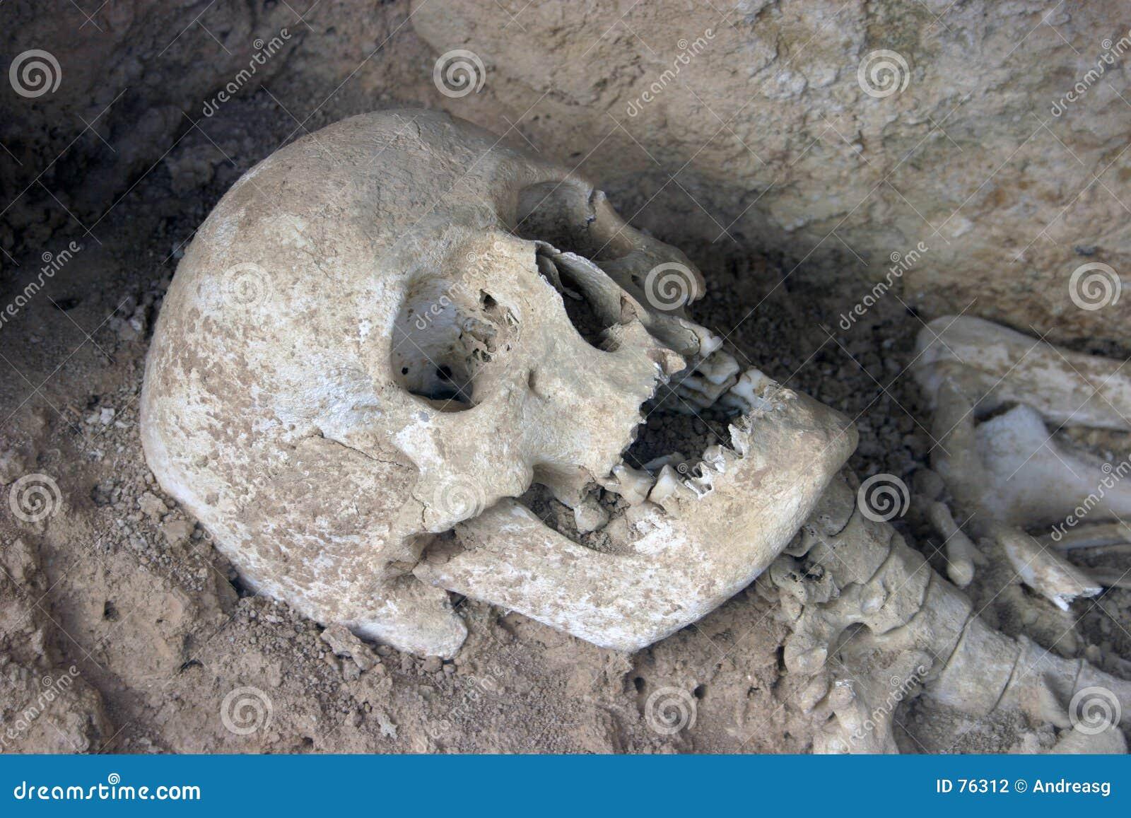 доисторический череп