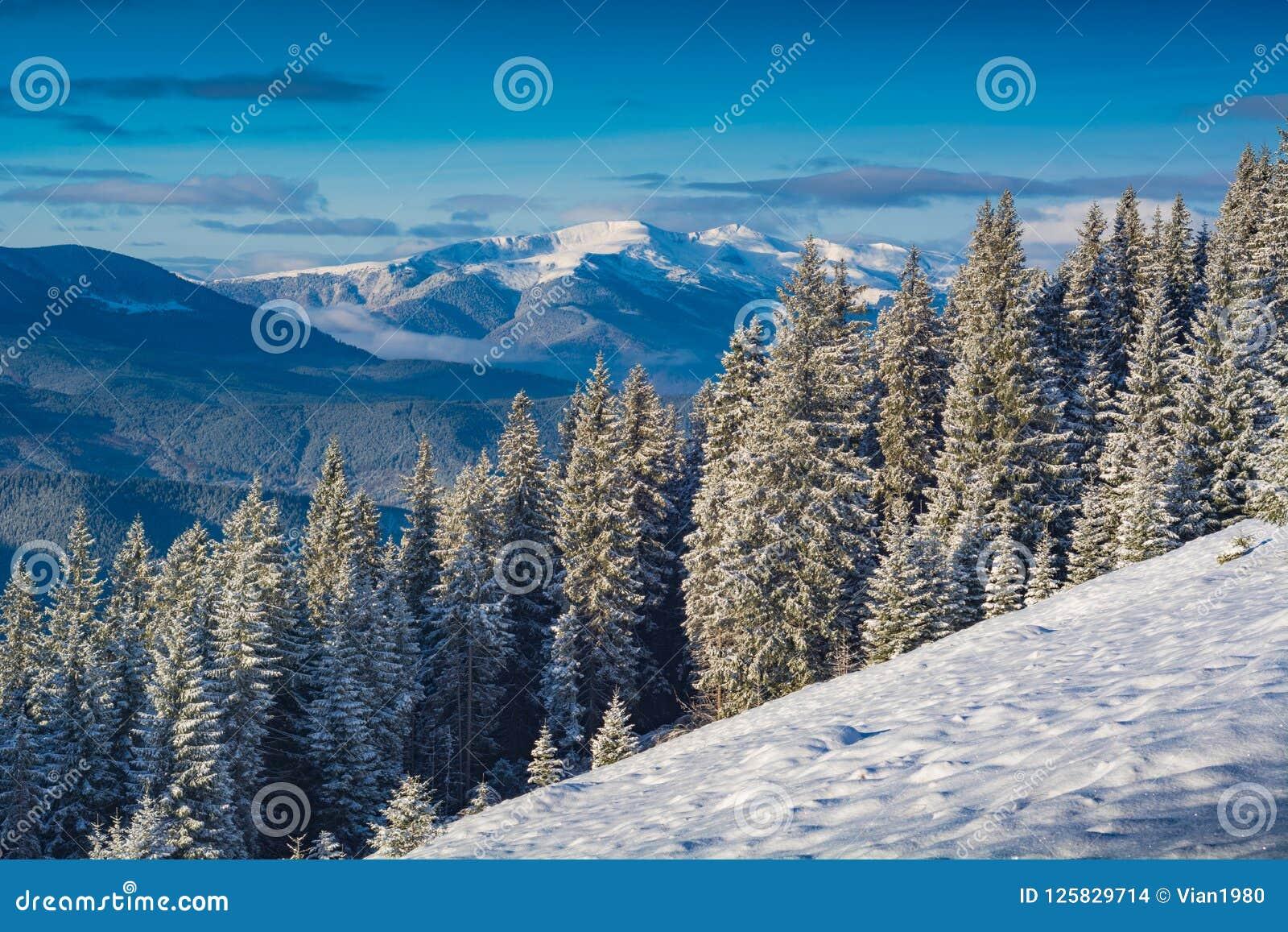 Долина прикарпатской горы покрытая с свежим снегом