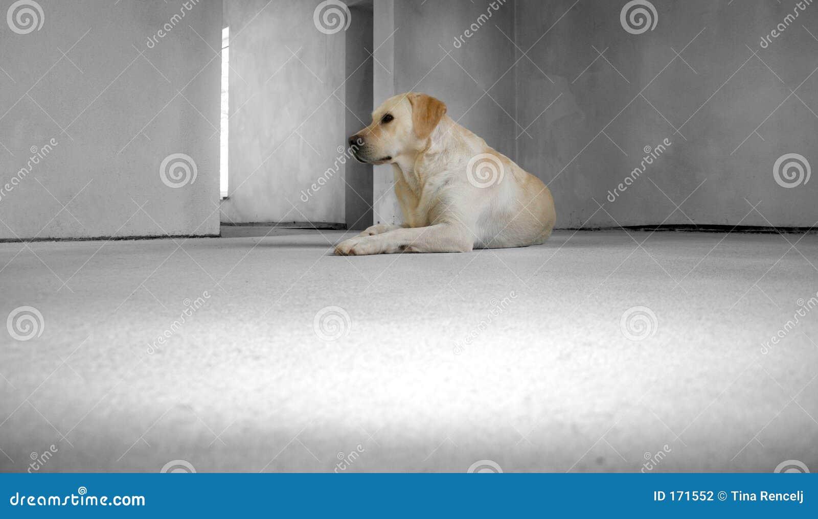 дом собаки новая