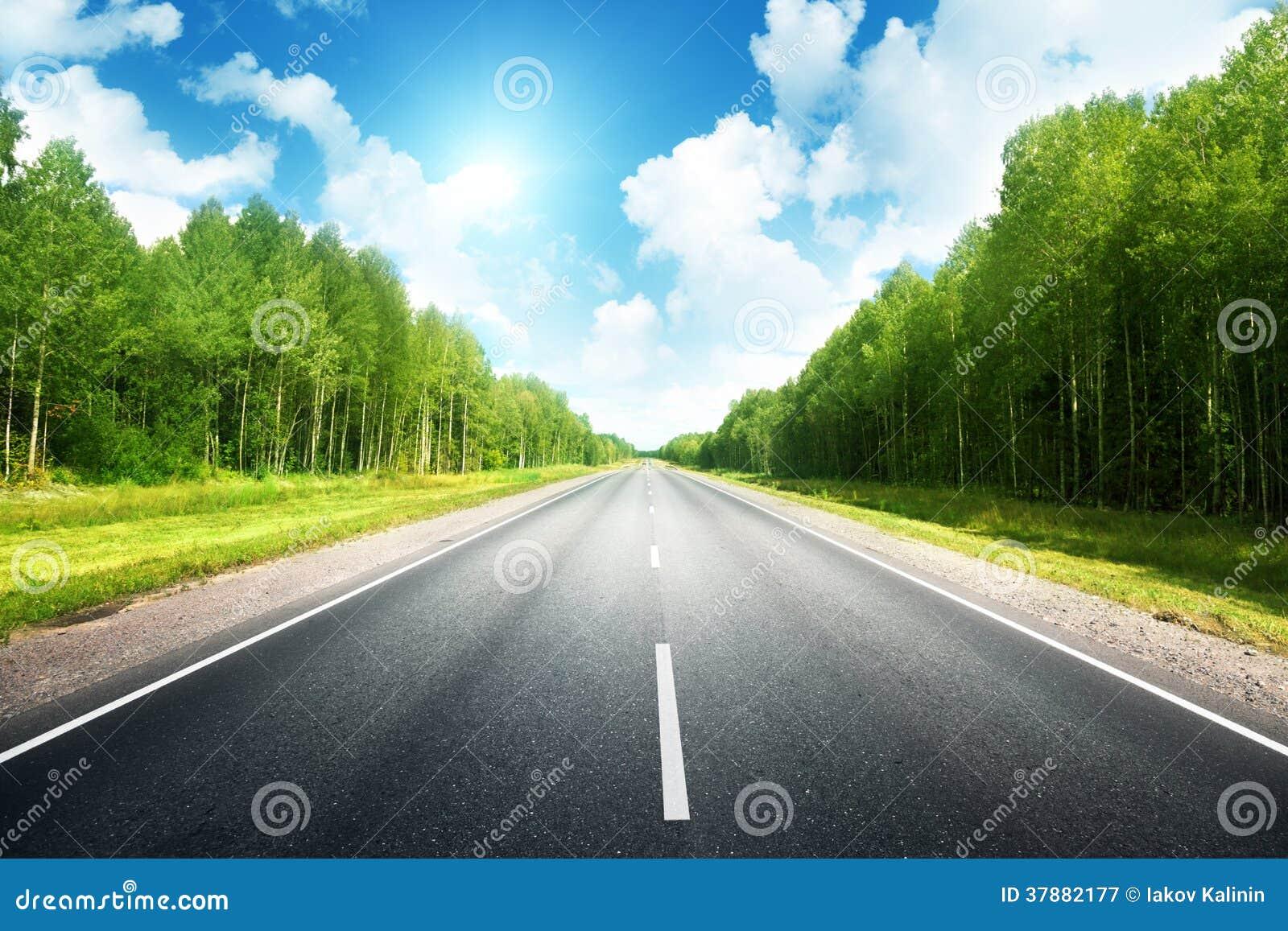 Дорога в лесе лета