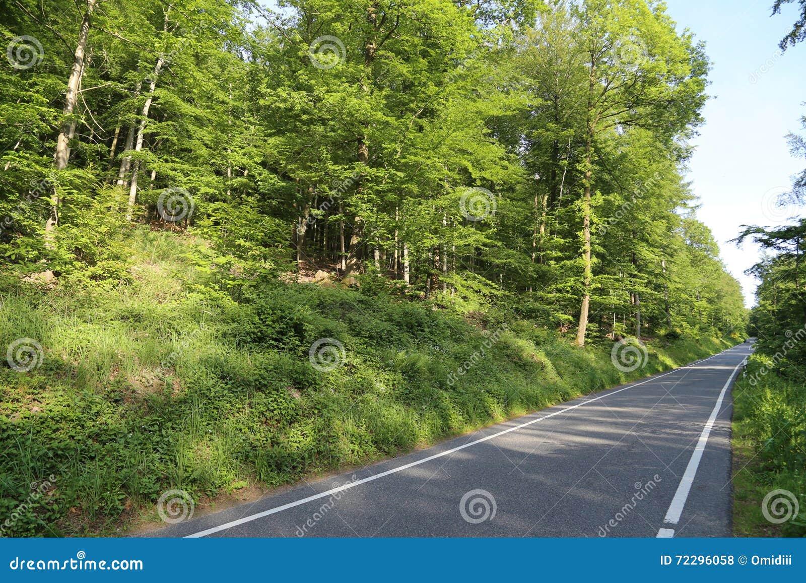 Download Дорога в пуще лета стоковое фото. изображение насчитывающей пасмурно - 72296058
