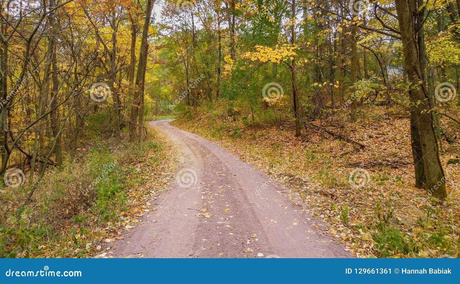 Дорога гравия в падении с желтыми деревьями