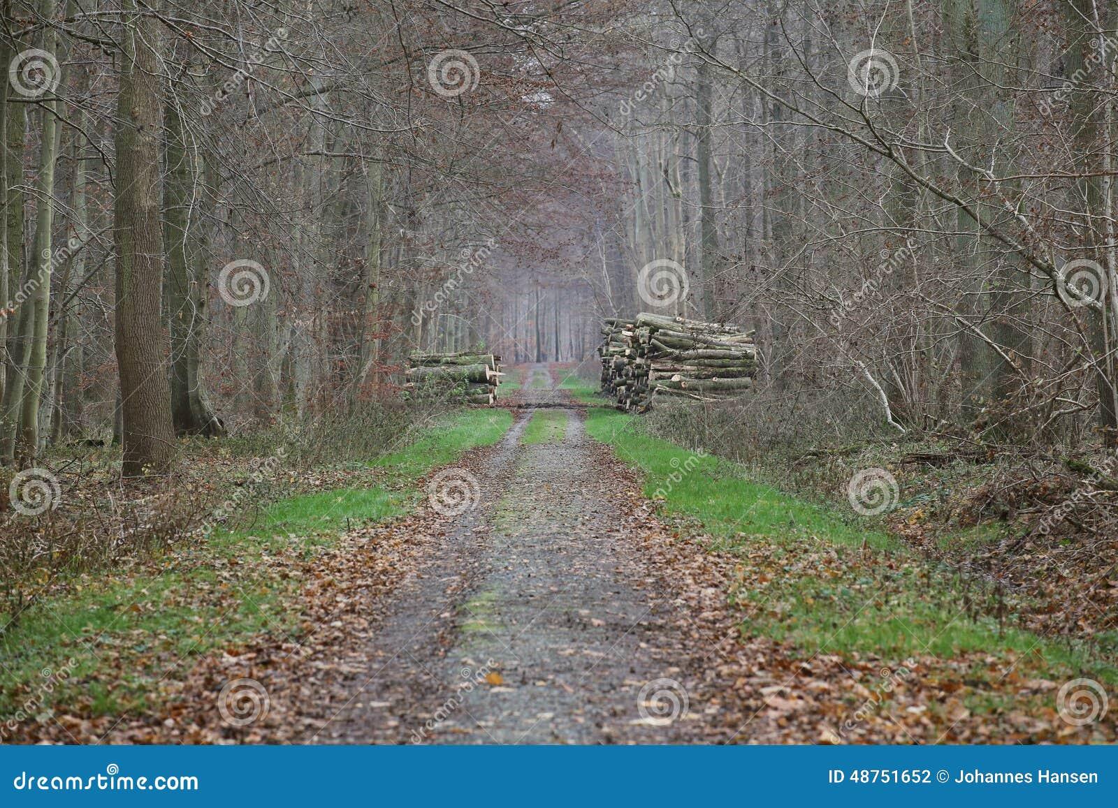 Сагалова подобрали на дороге в лесу с тремя фаллоимитаторы