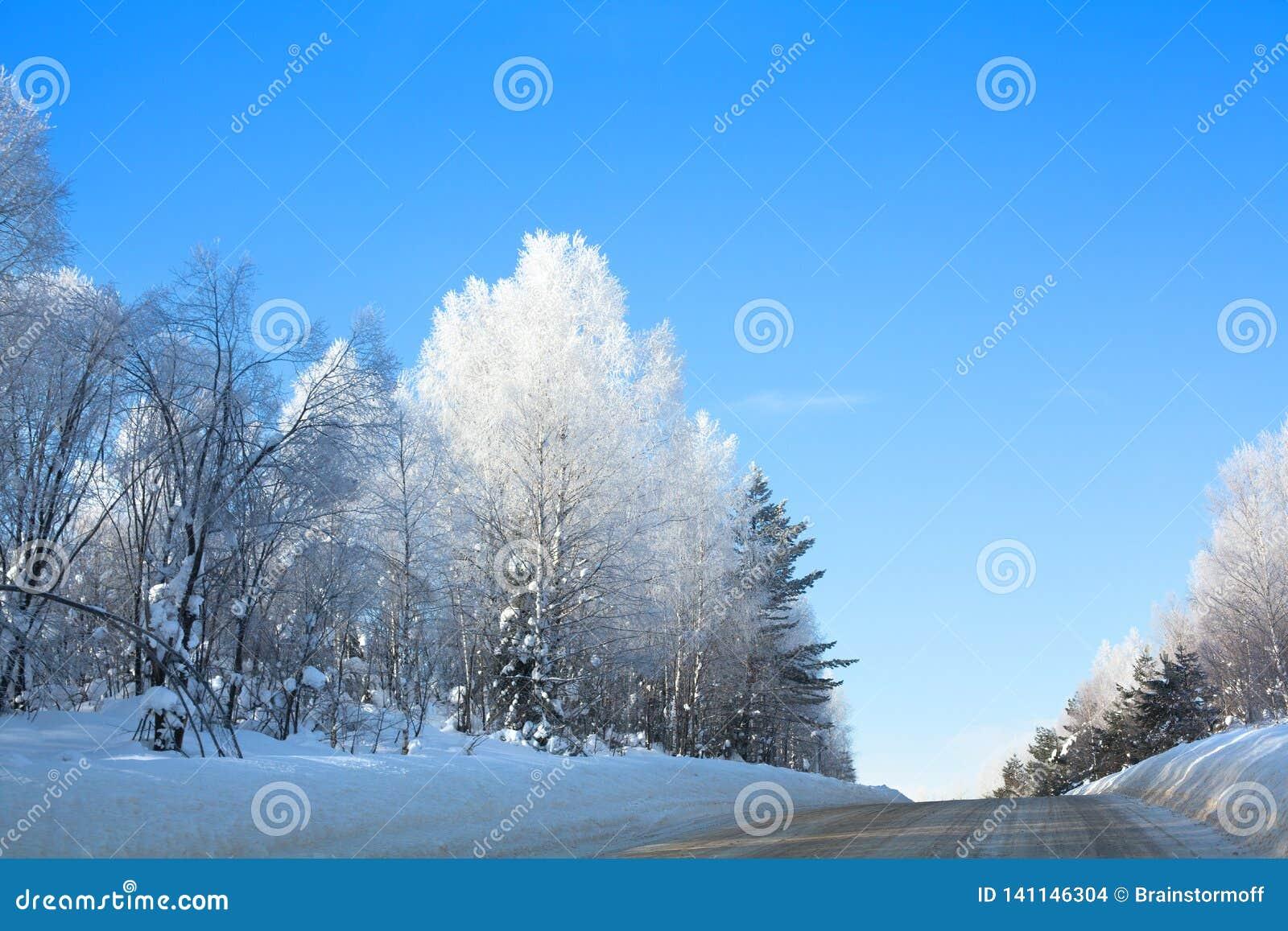 Дорога зимы в лесе среди белой березы и зеленых елей покрытых с изморозью, смещений, светя снега на предпосылке голубого неба