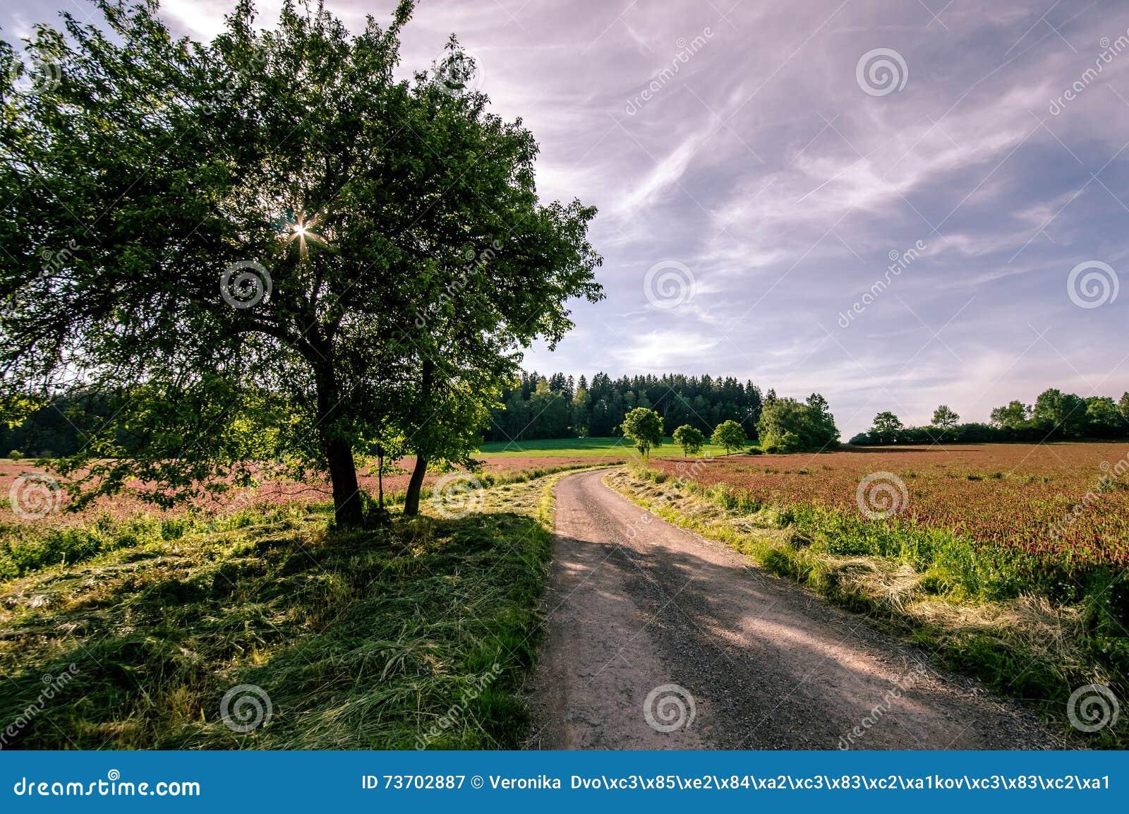 Дорога между полями клевера