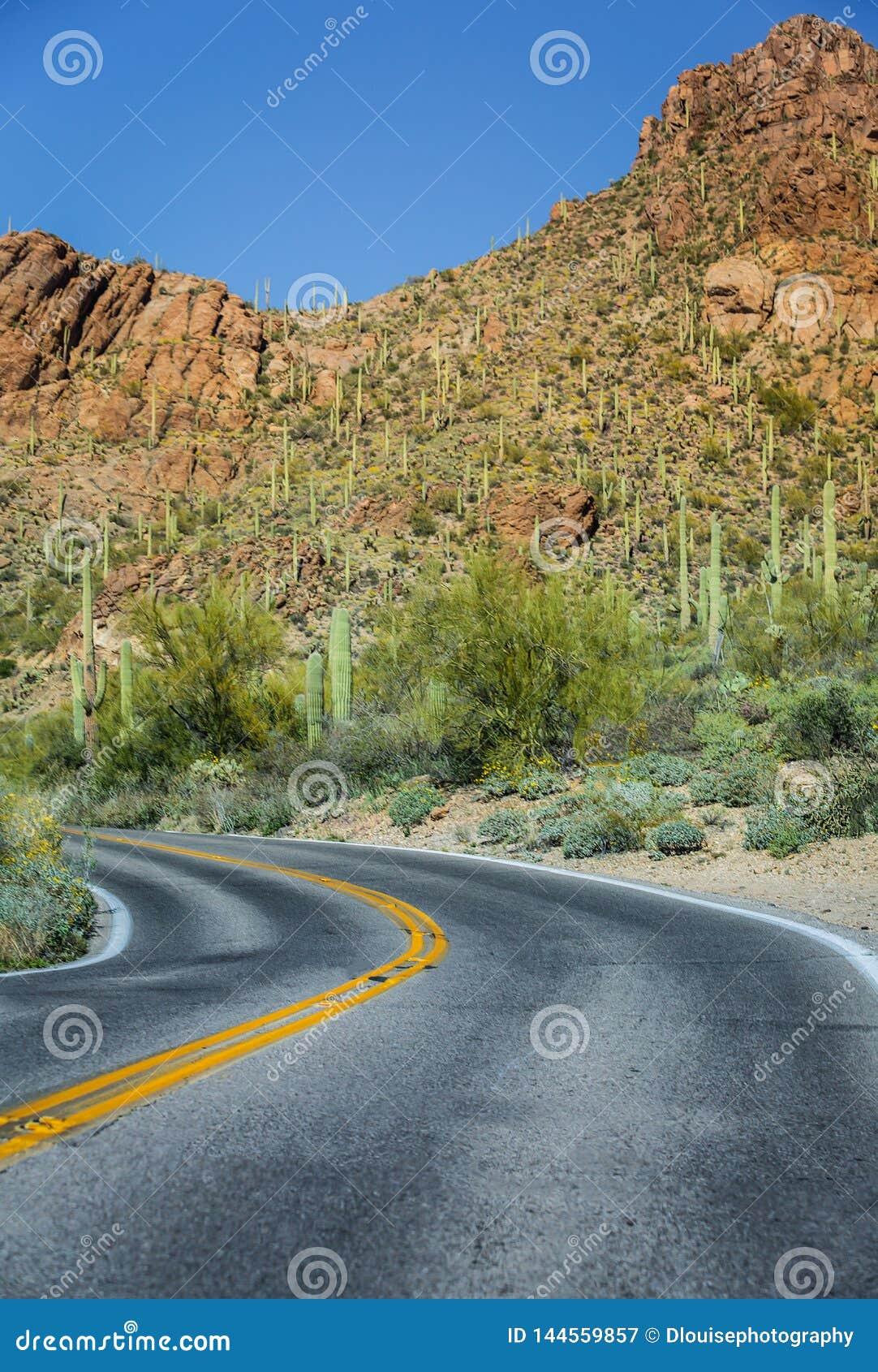 Дорога национального парка Saguaro Аризоны