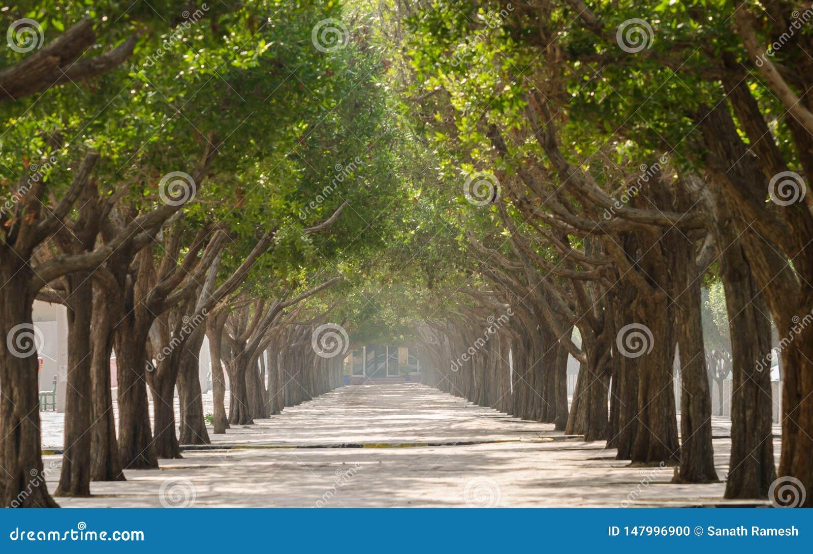 Дорожка с деревьями в симметрии на обеих сторонах