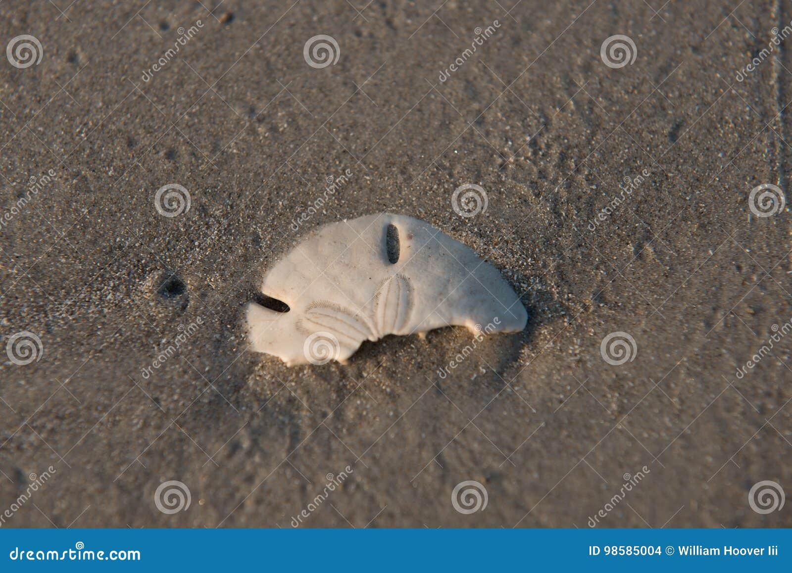 Доллар песка острова Padre половинный