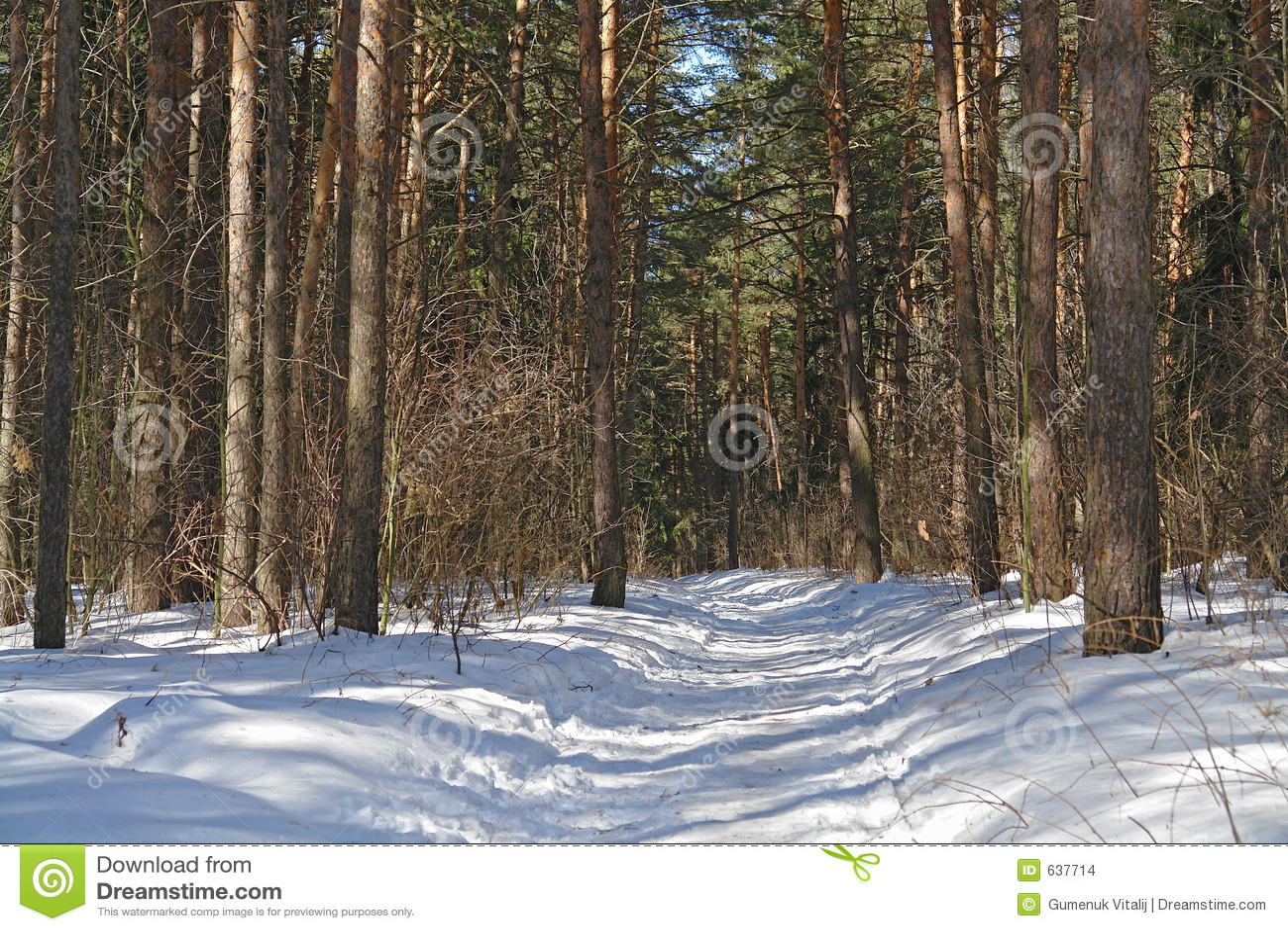 Download древесина сосенки стоковое фото. изображение насчитывающей хобот - 637714