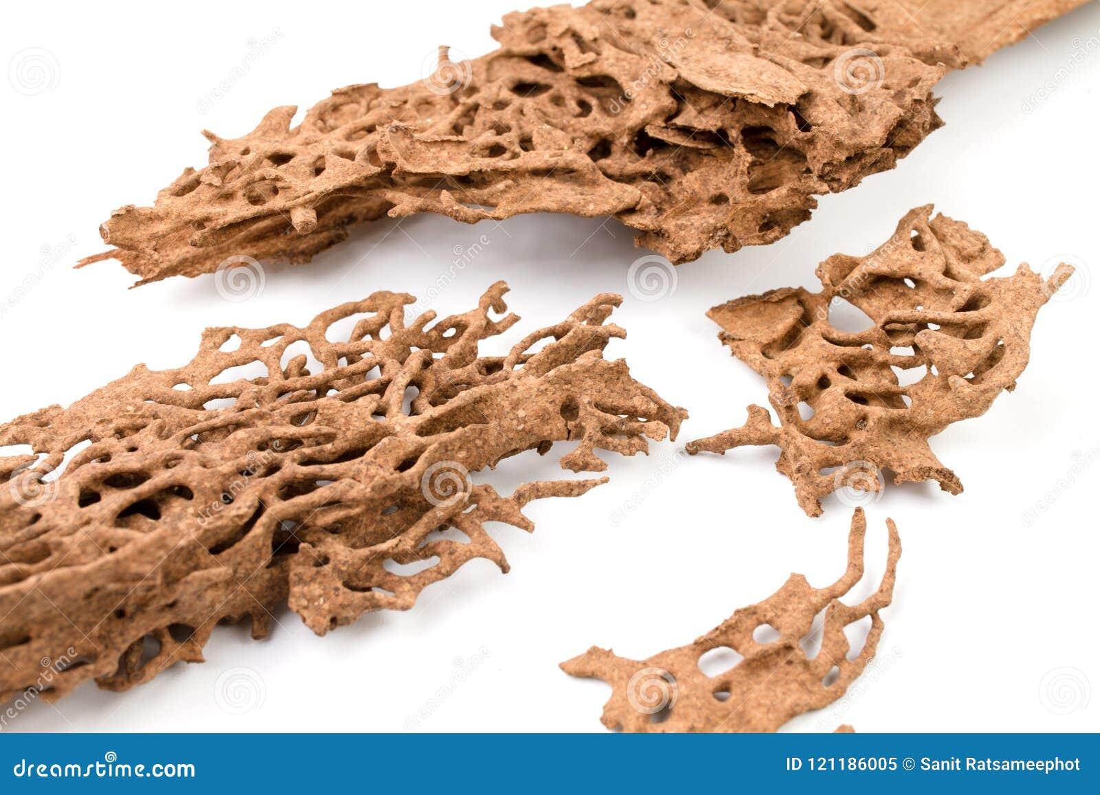 Древесина спада Брайна которое повреждено термитом