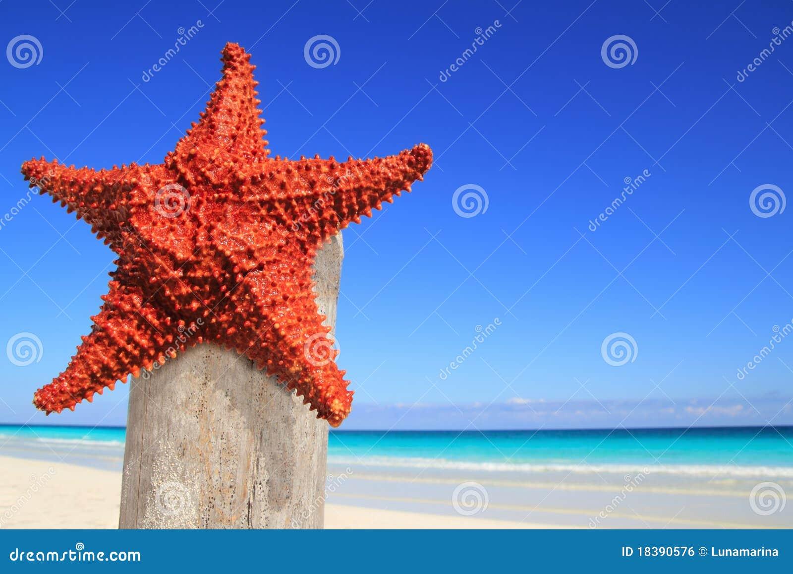 древесина starfish полюса пляжа карибская
