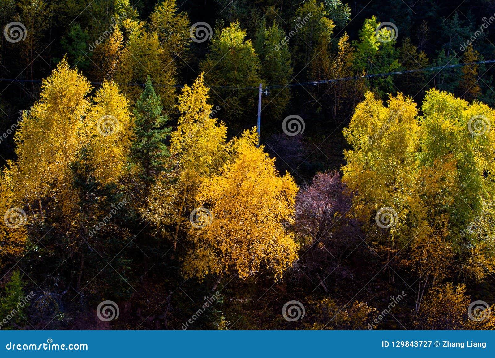 Древесины в гористой местности, Тибете, Китае