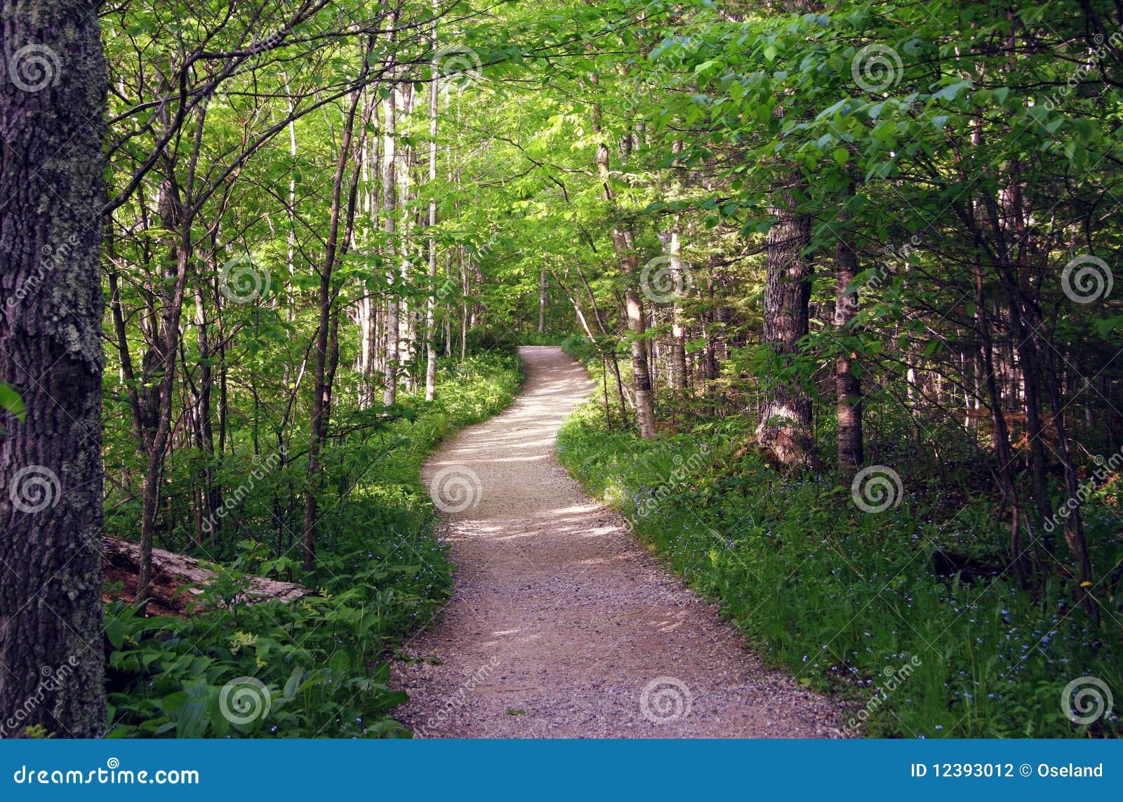 древесины лета путя