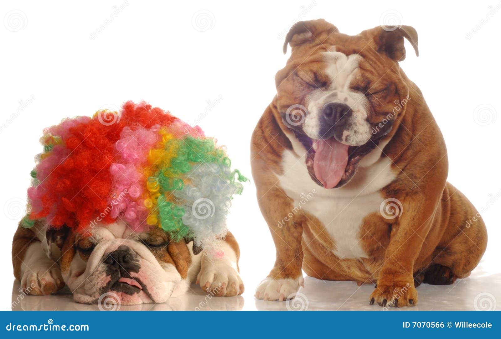 другая собака смеясь над одним
