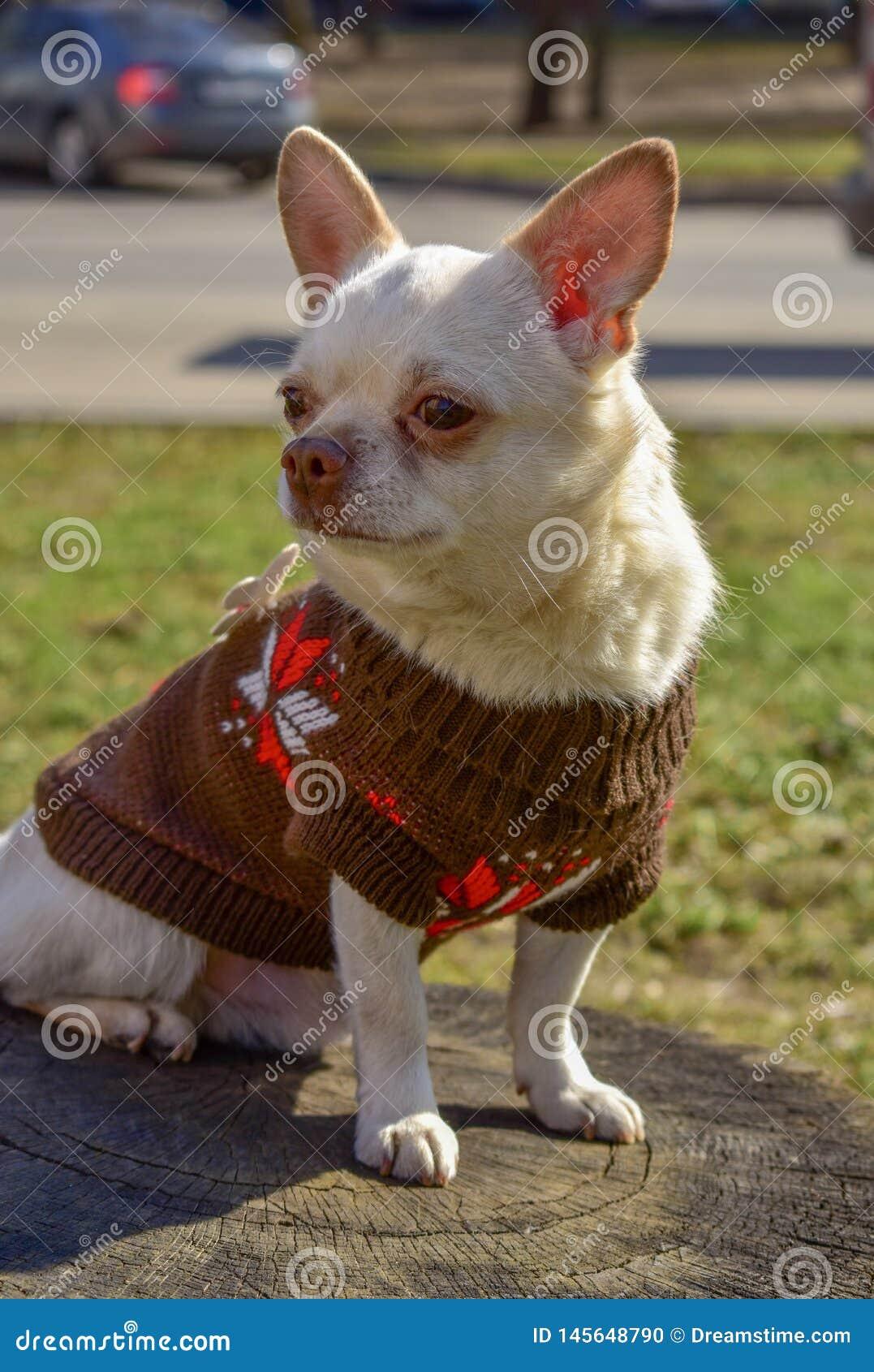 Друг щенка собаки ангела белый